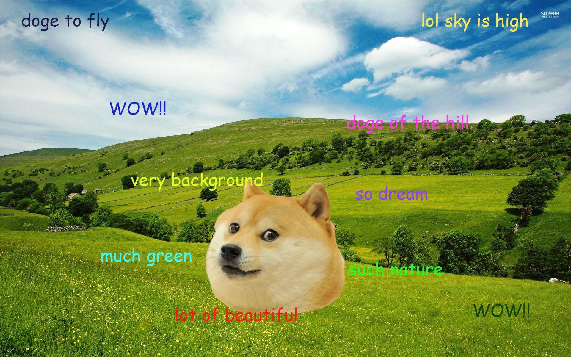 Doge 822446; doge 822436