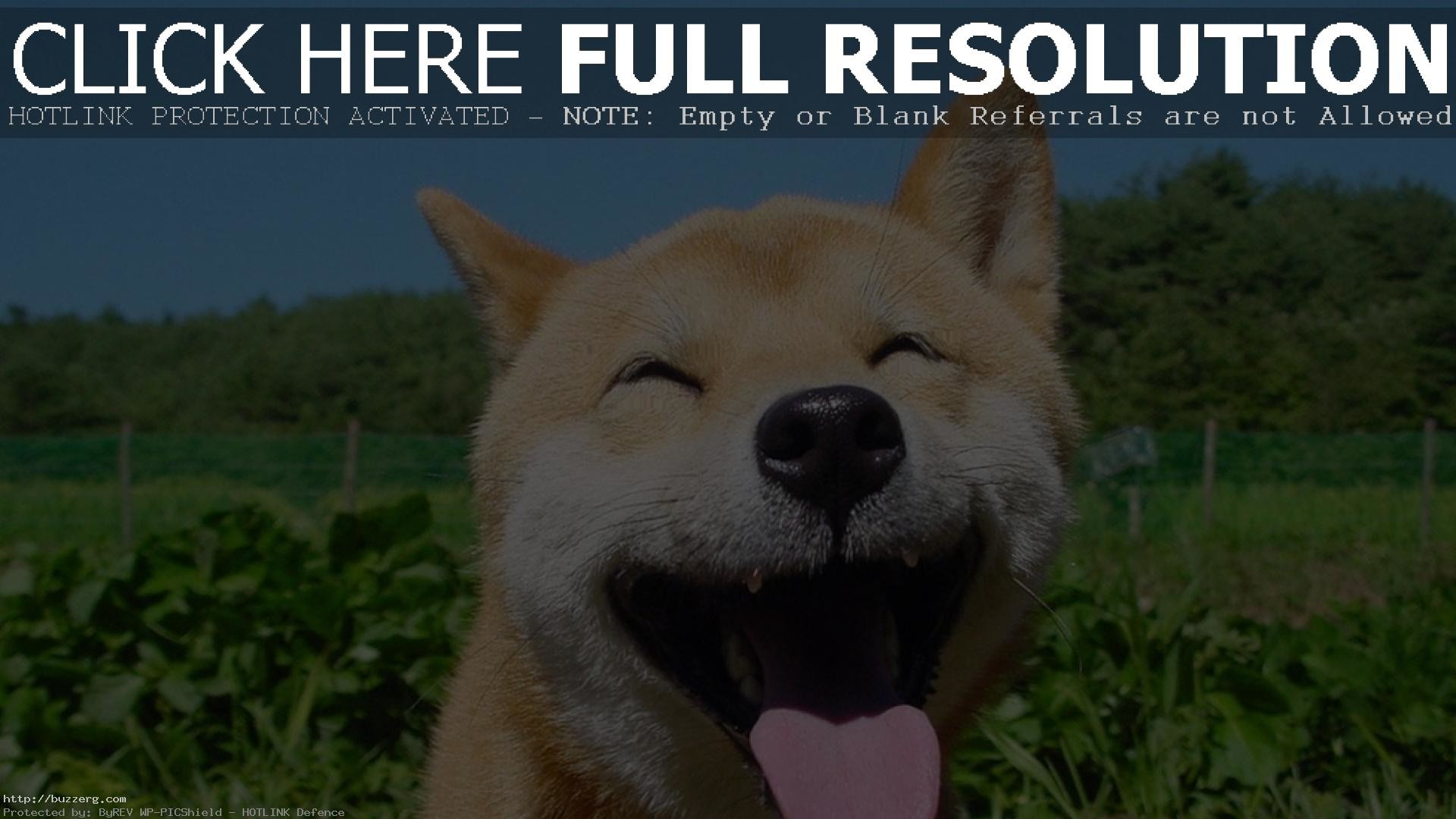 Doge Shibe Wallpaper