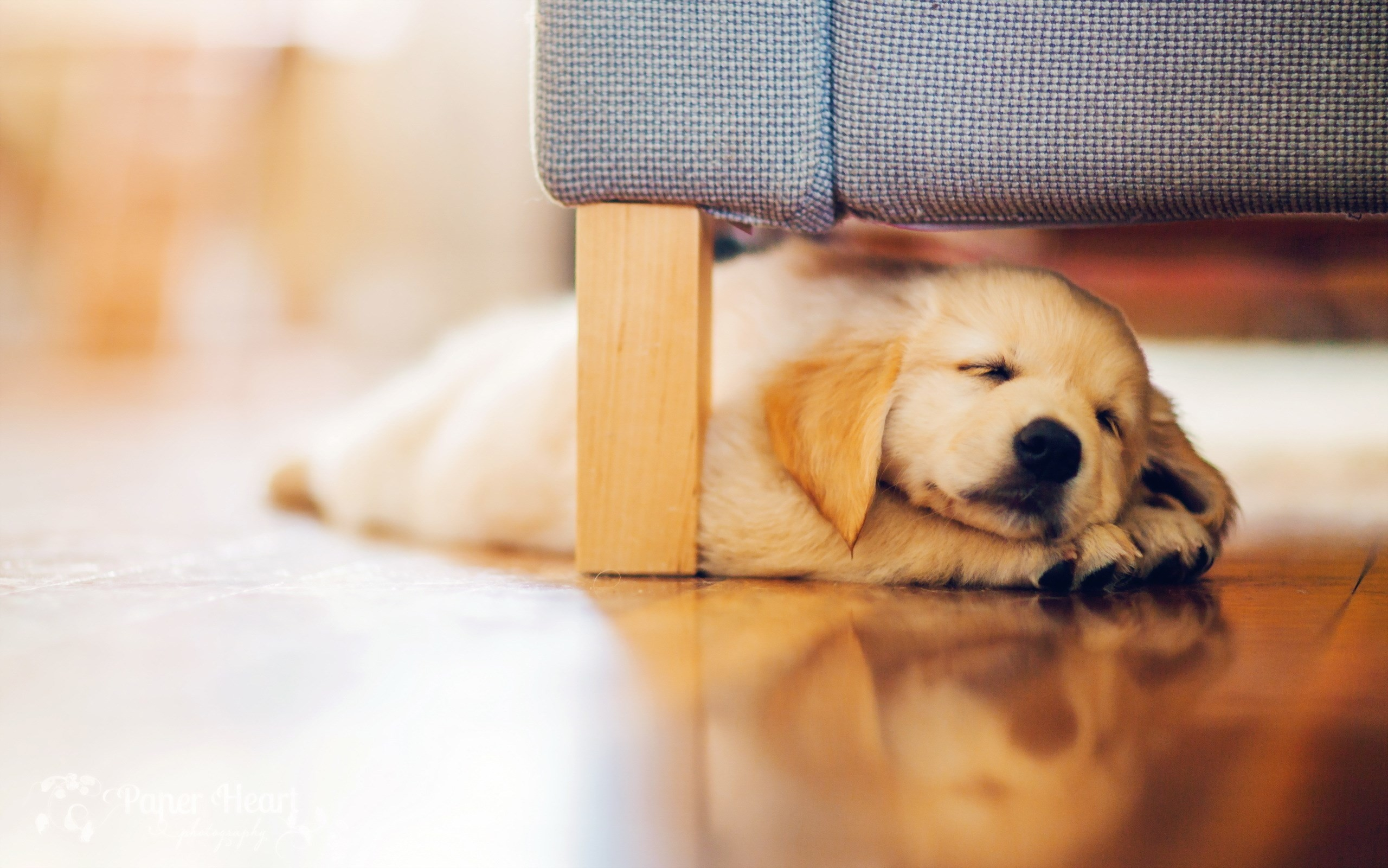 Dog Puppy Retriever,