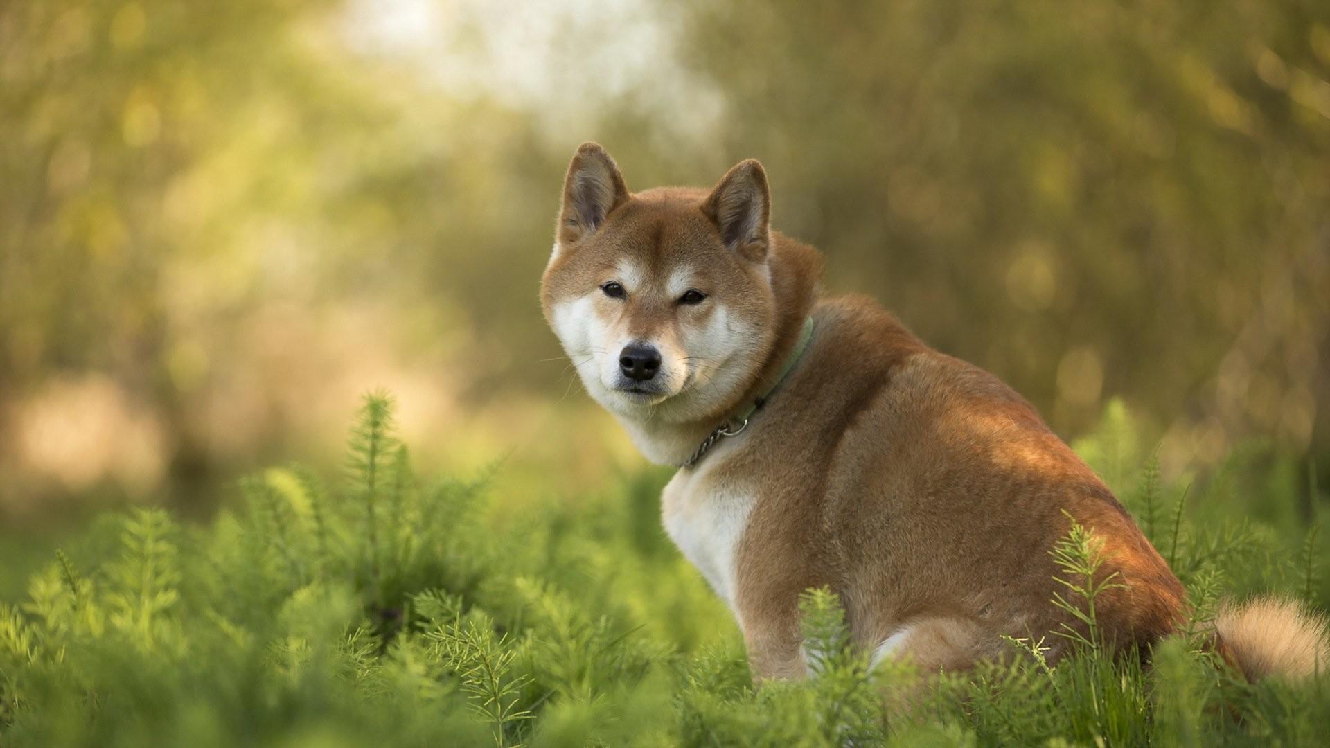 Image result for doge wallpaper | DOGE | Pinterest | Wallpapers .