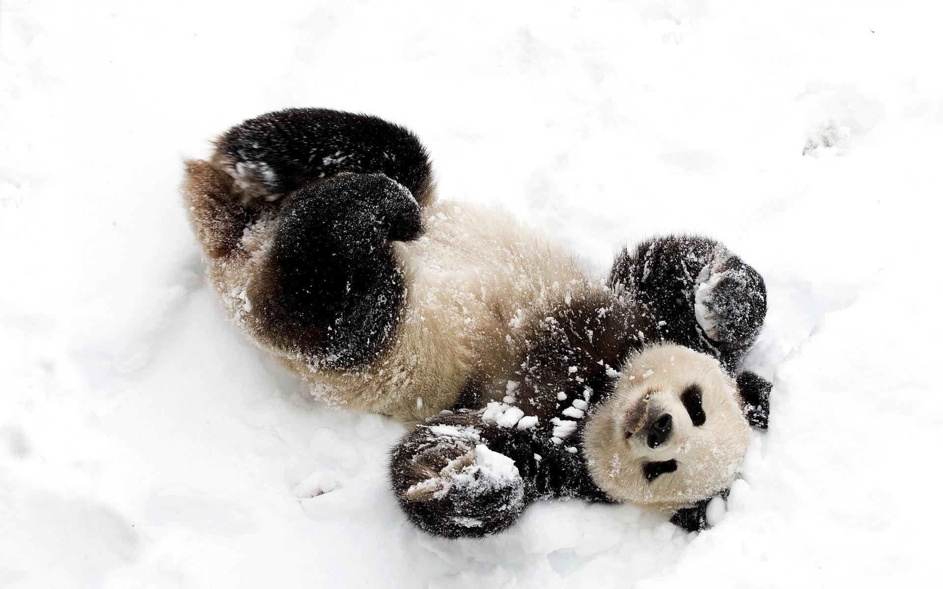 panda wallpaper for computer