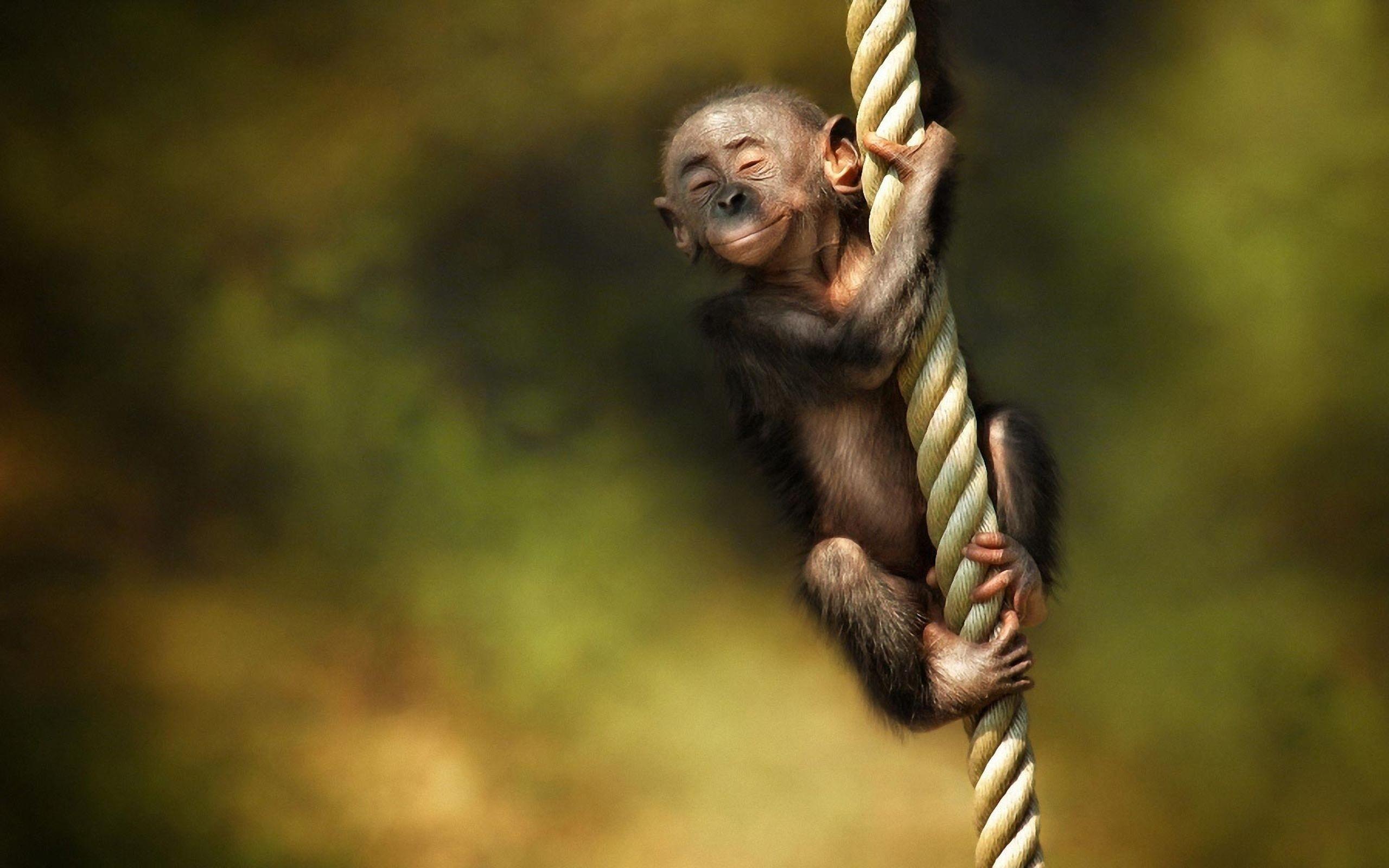 Download Little Monkey Cute Animal Wallpaper Desktop #52442 (1401 .