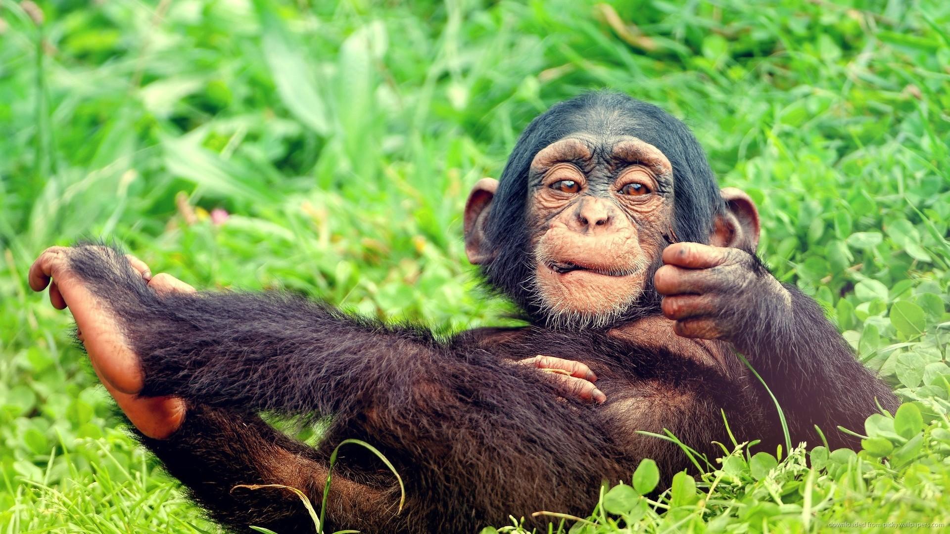 Resting Baby Monkey for 1920×1080
