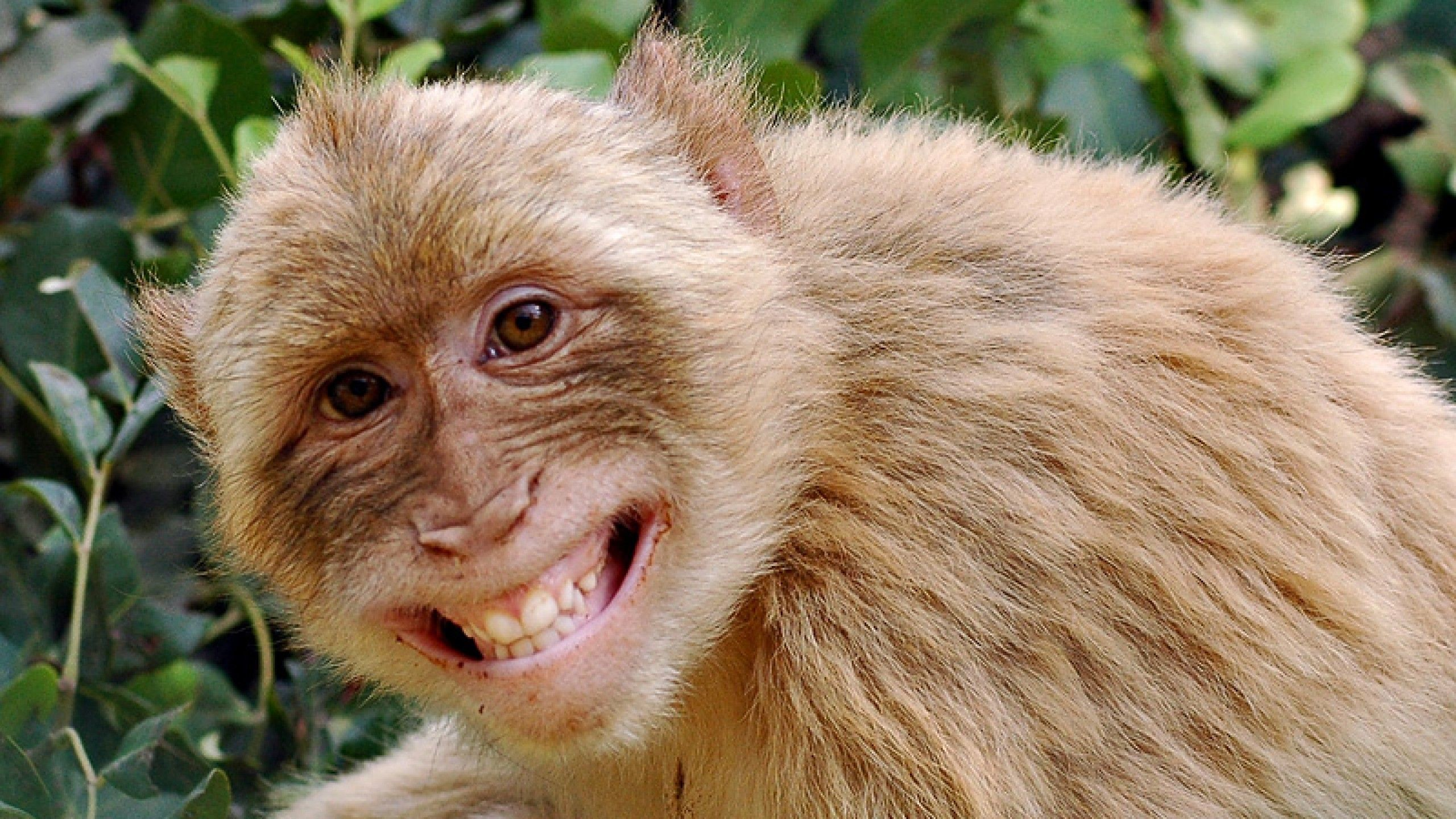 Funny Monkey Pictures Wallpaper Wallpaper Download MONKEY | HD Wallpapers |  Pinterest | Monkey wallpaper, Hd wallpaper and Wallpaper