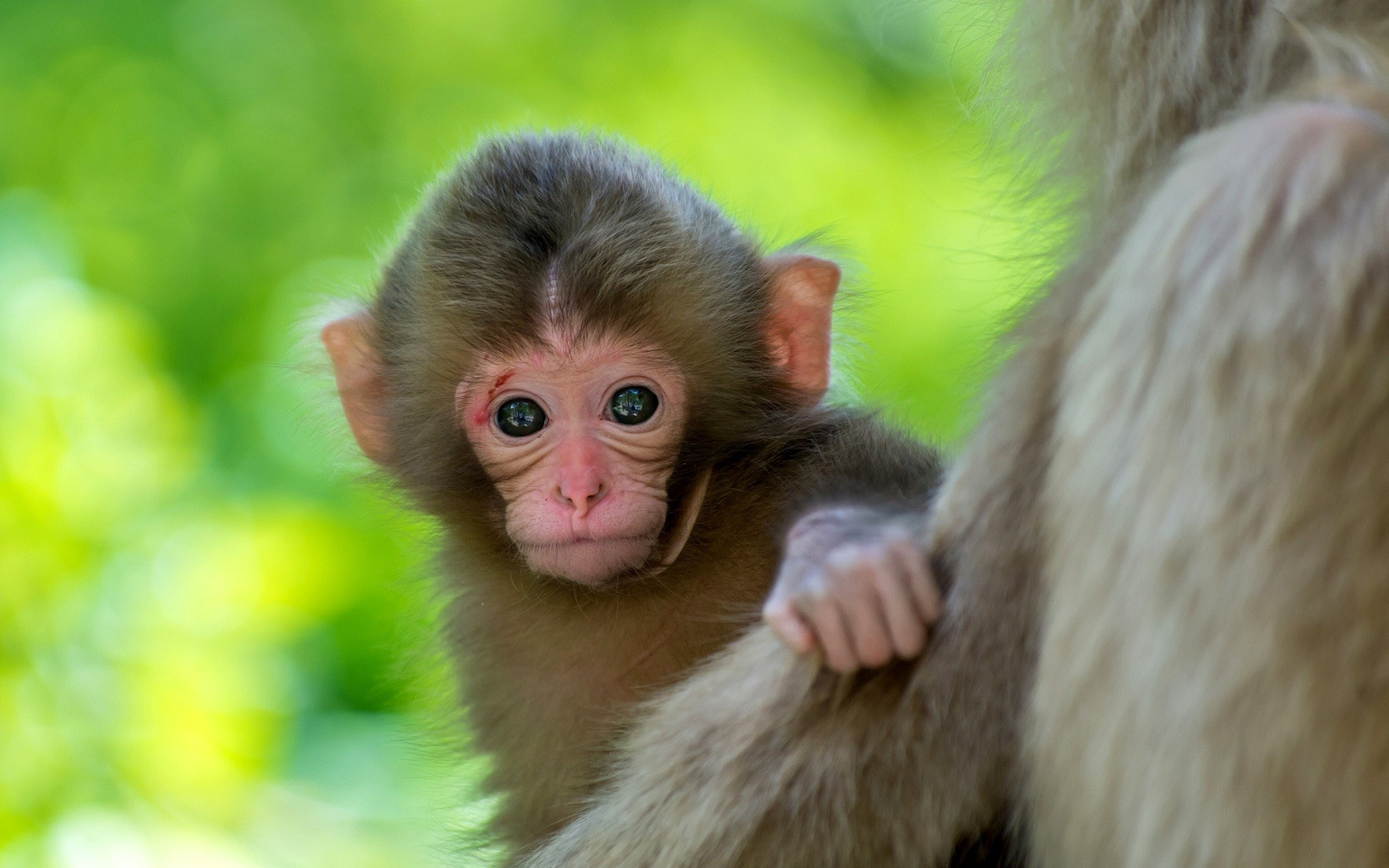 Mother and Cute Baby Animal Pictures
