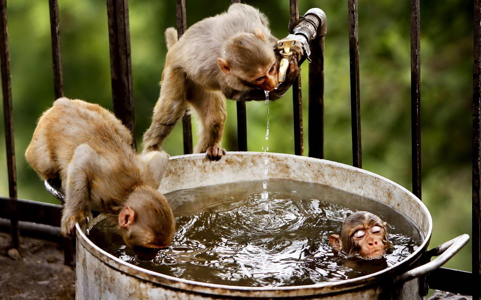 capuchin and dog Animals bed LYING monkey Pet HD Wallpaper | Naczelne |  Pinterest | Monkey, Dog and Animal