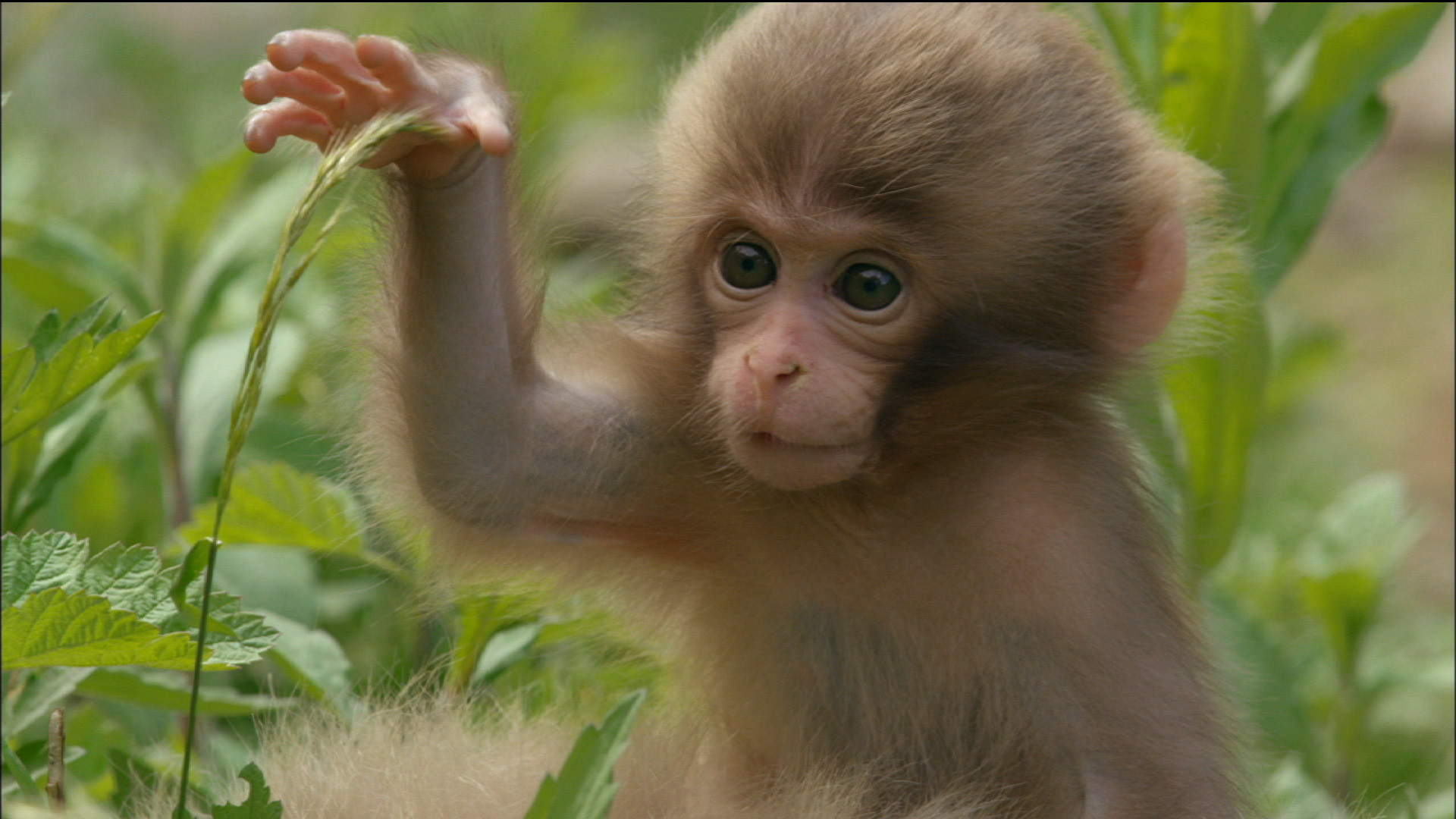 Cute Baby Monkeys Playing & Relaxing Compilation – [New 2015] – YouTube |  Random Stuff | Pinterest | Youtube