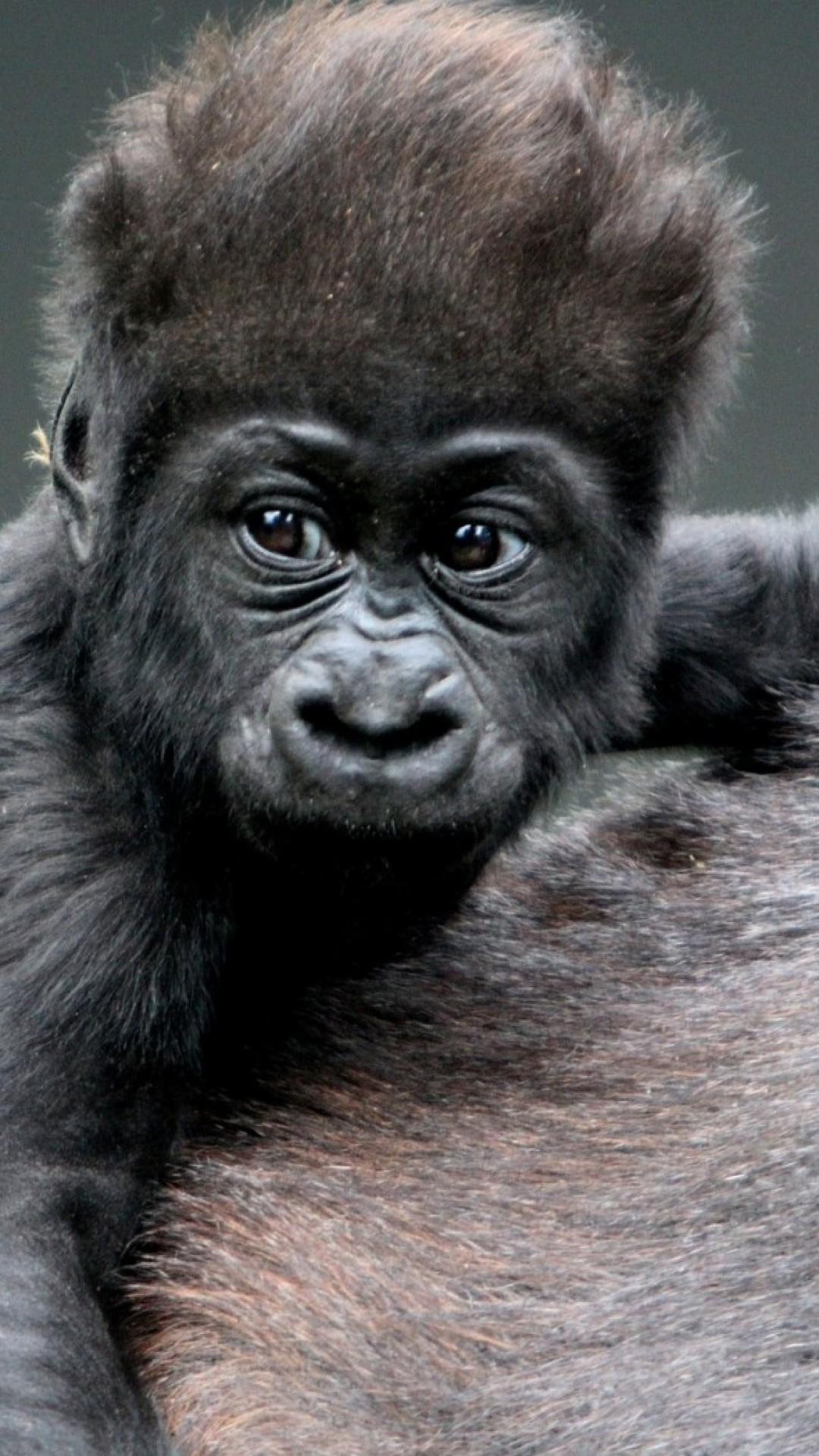 Wallpaper monkey, baby, gorilla, hair