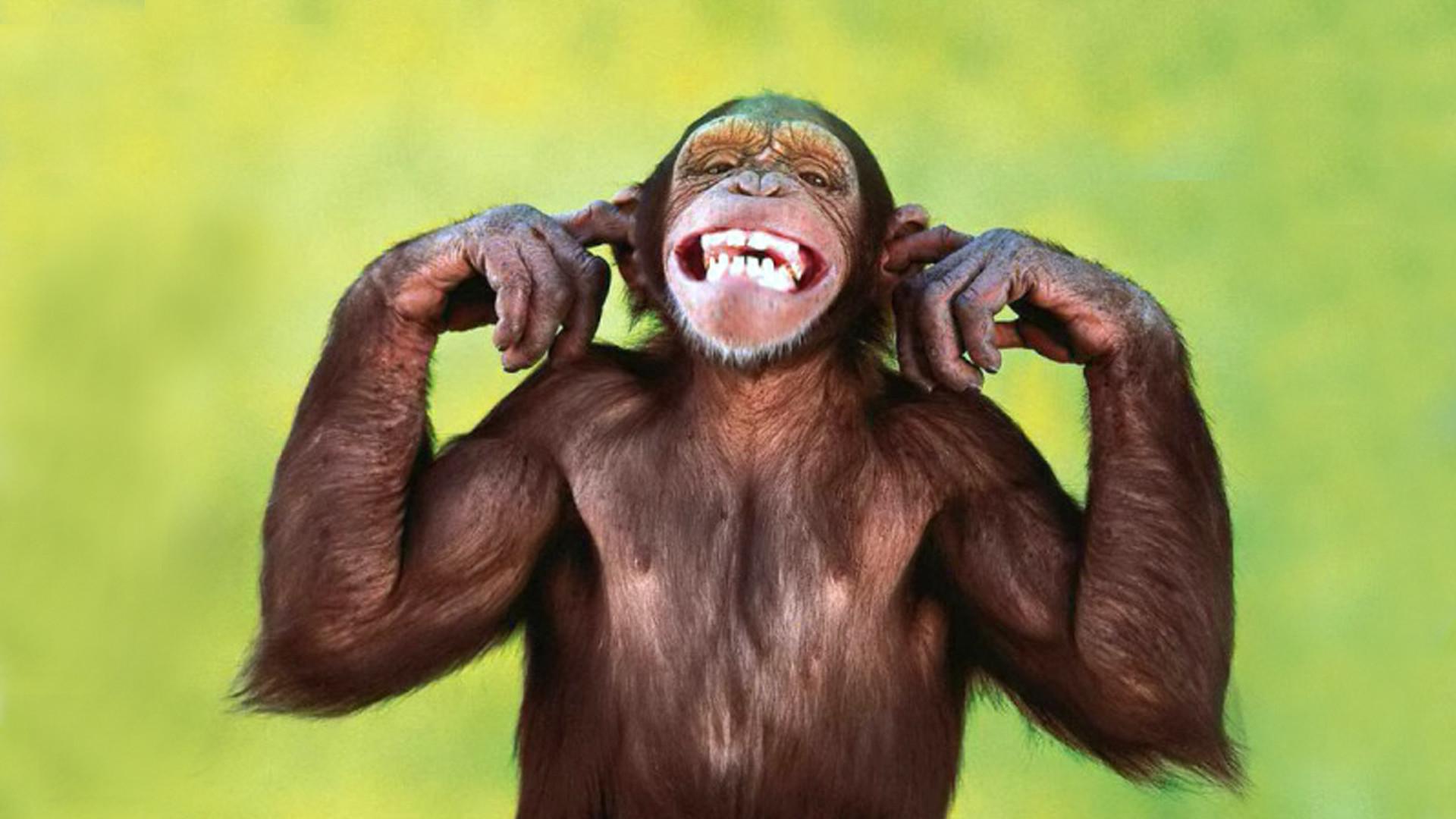 Funny Monkey – Free Choice Wallpaper : Free Choice Wallpaper