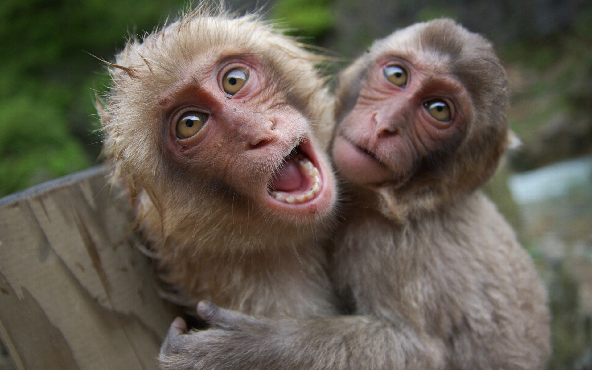 Explore Funny Animals, Baby Animals, and more! Funny Monkey Pictures  Wallpaper …