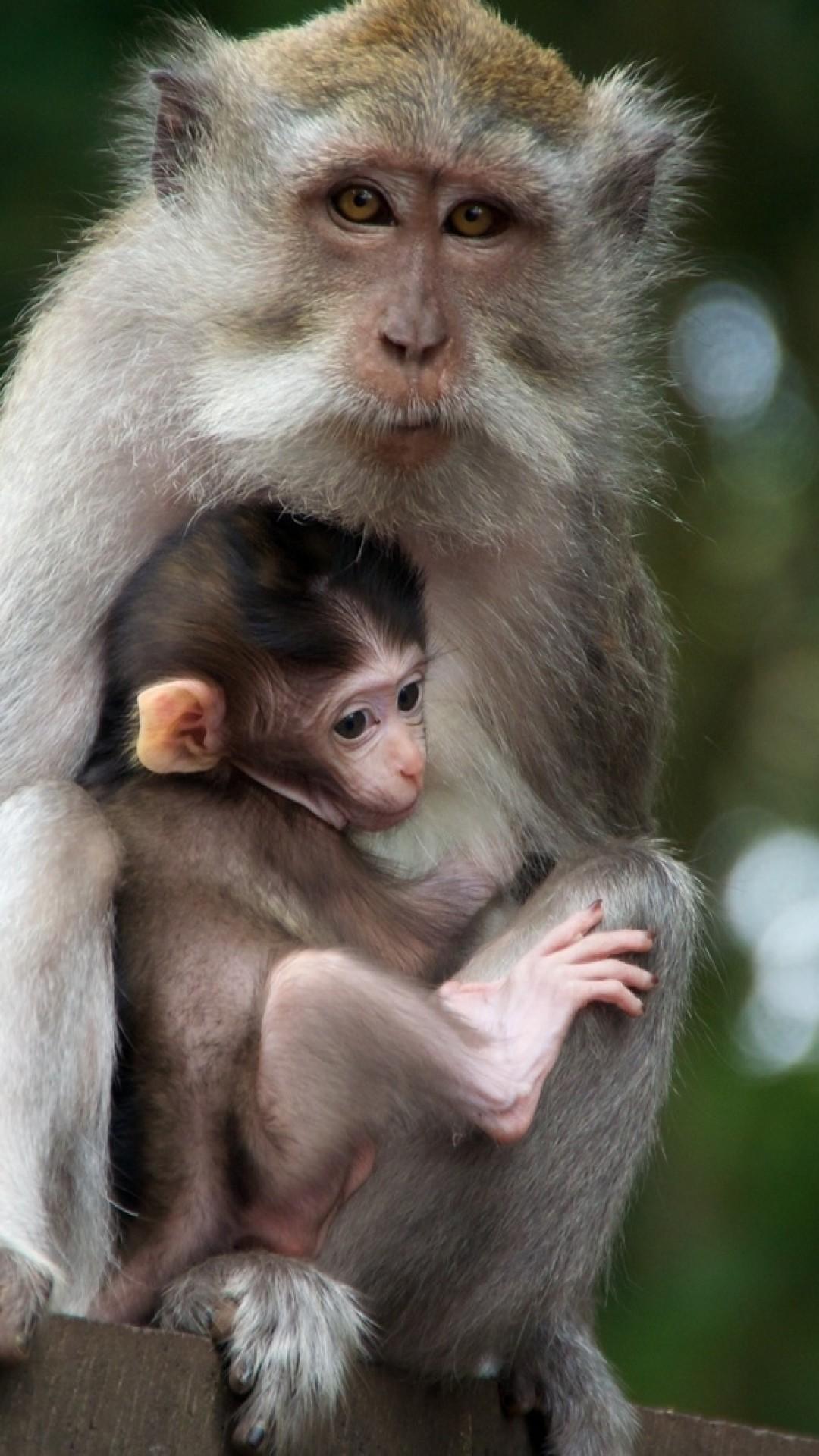 Wallpaper monkey, family, baby, care, tenderness
