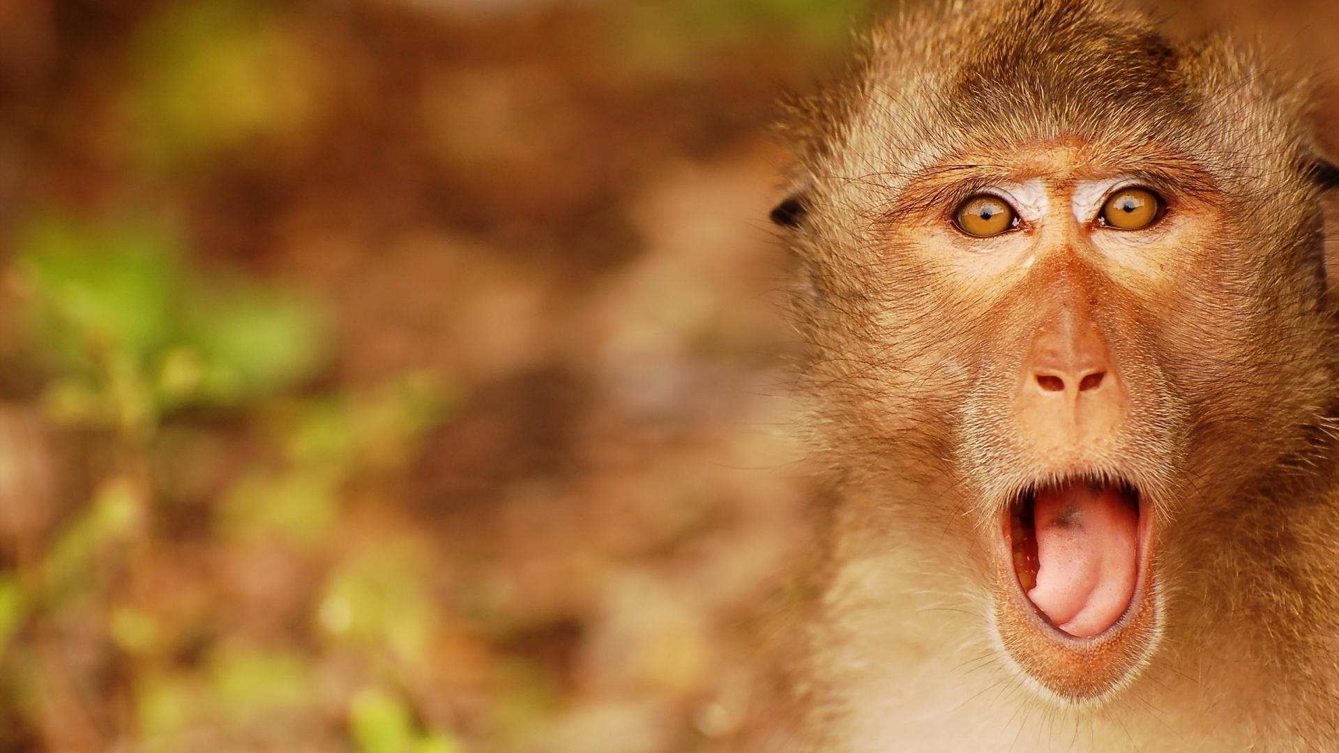 Baby Monkey Wallpaper 1920×1080
