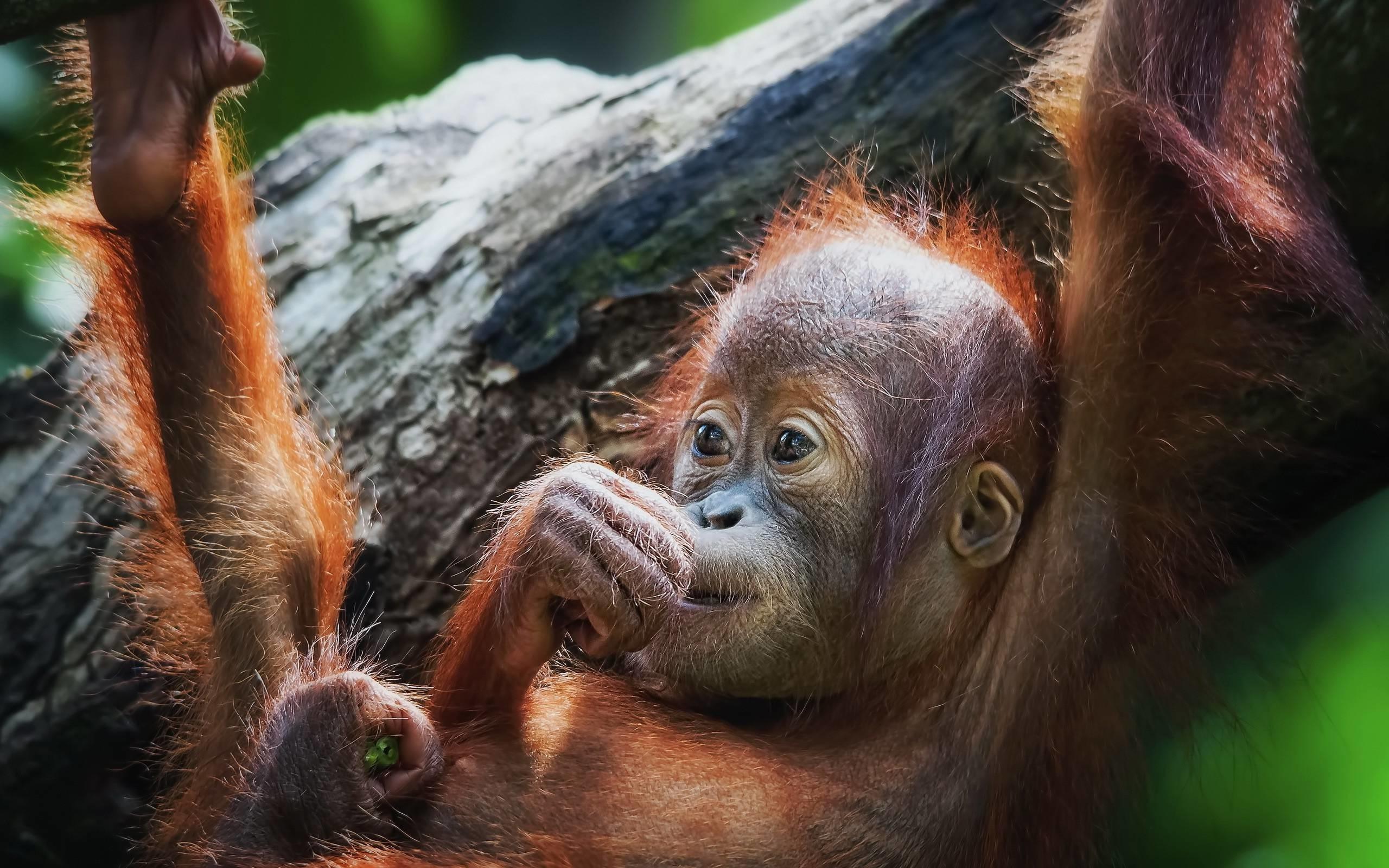 Sweet Baby Monkey HD Wallpaper – HD Wallpapers Free DownloadHD .
