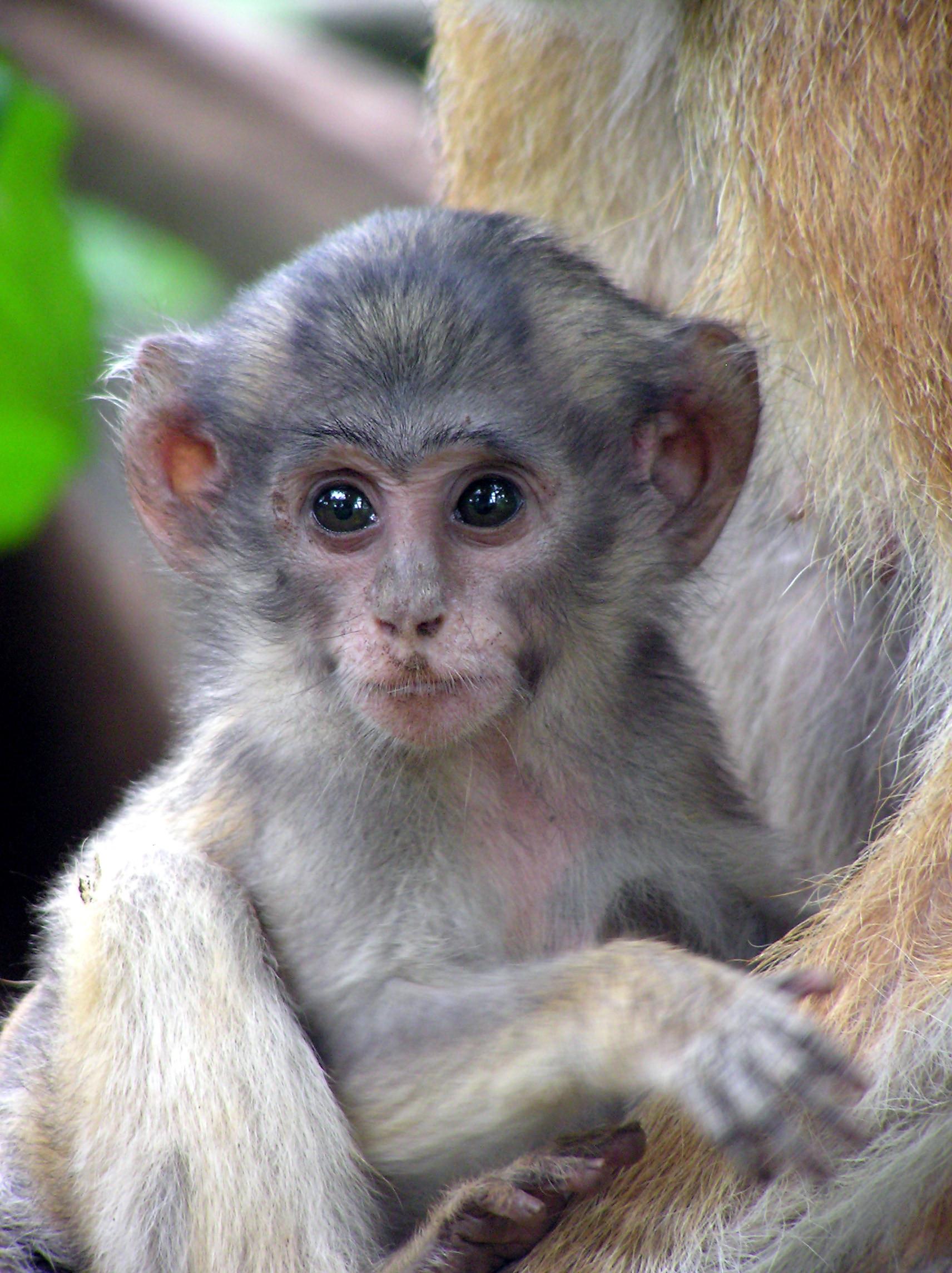 white monkey photo