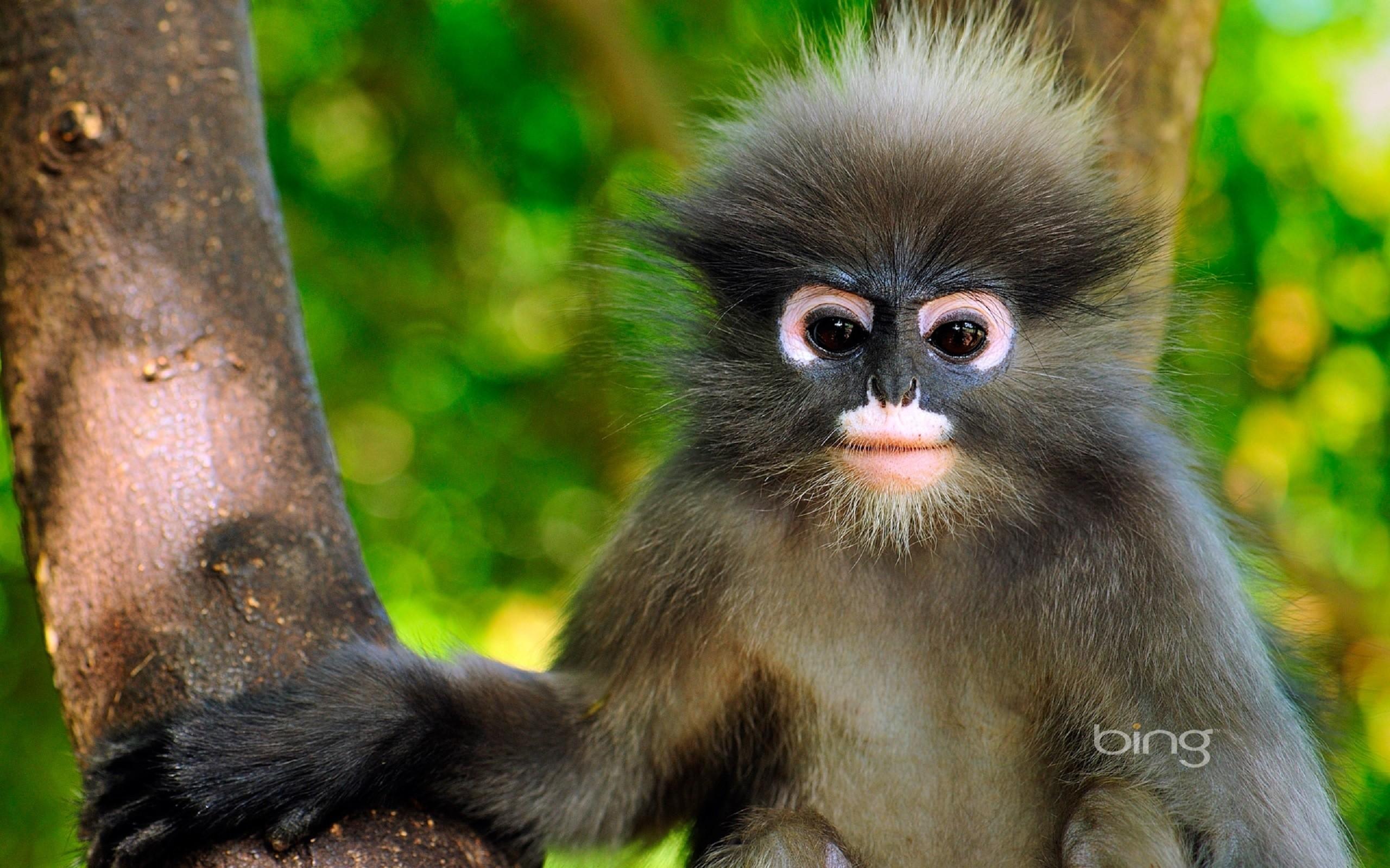 Bing, Monkey, Cute Monkey, Cool, Baby Monkey, Funny, Beauty Baby