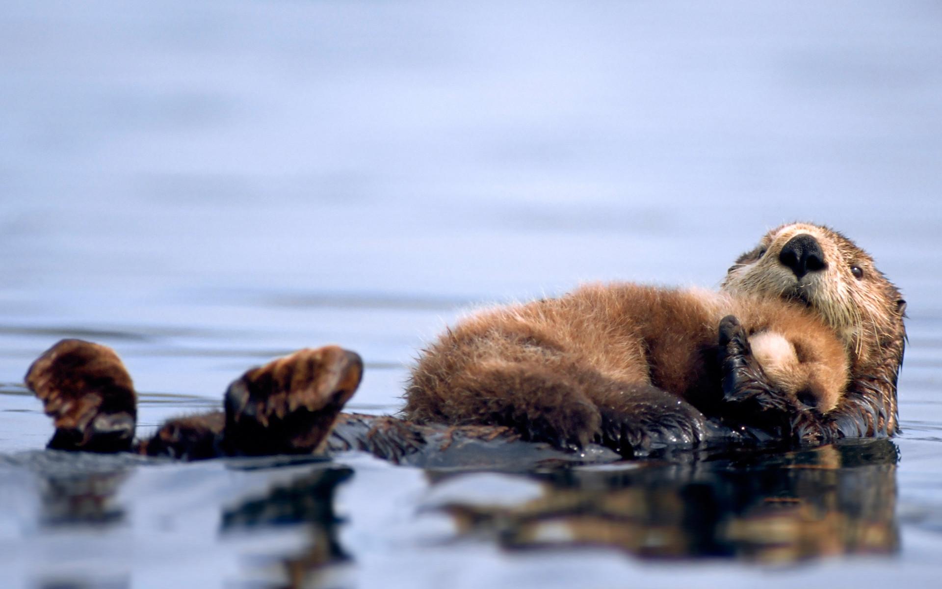 Cute Baby Animals #7000196
