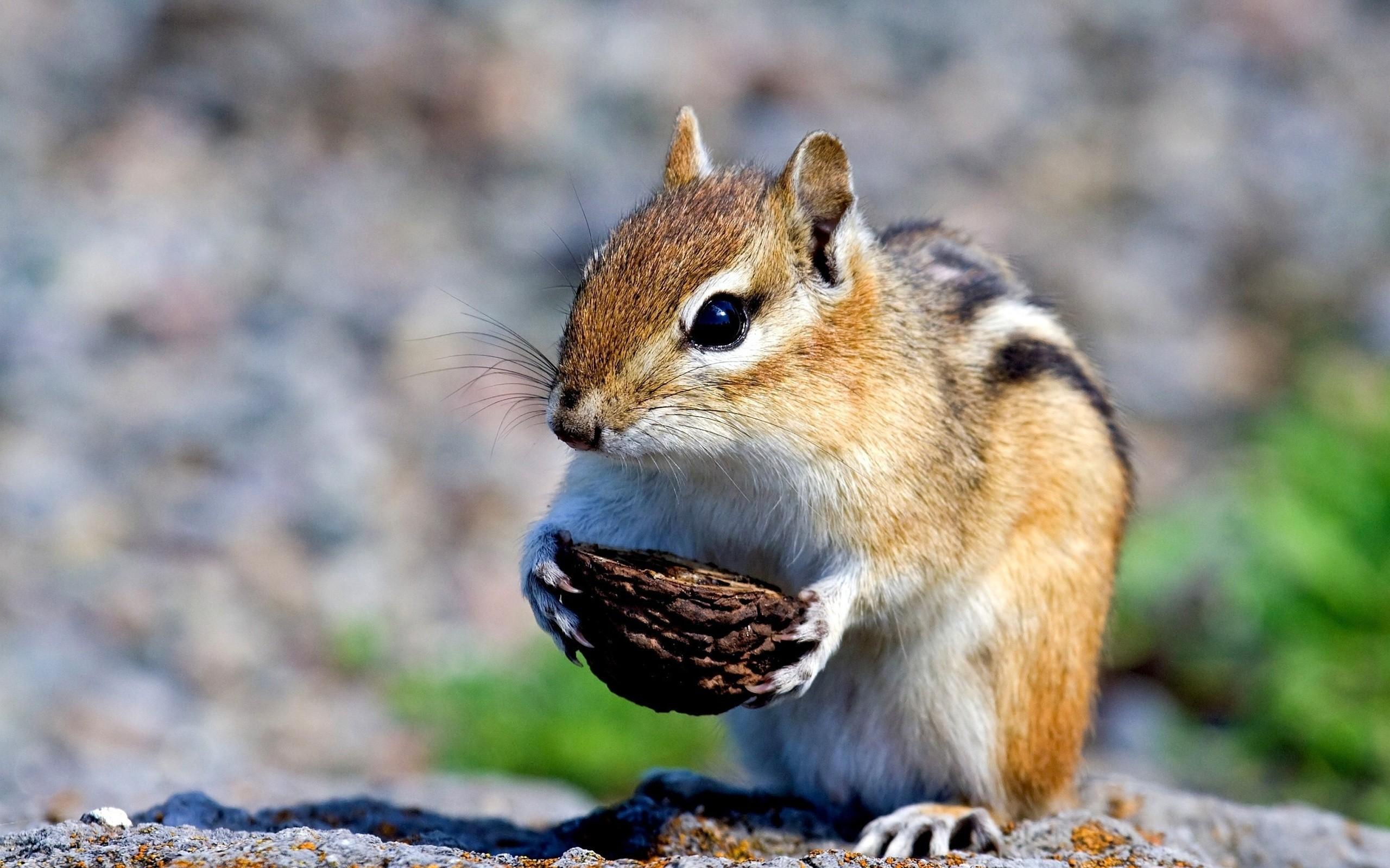 Cute Squirrels Wallpaper