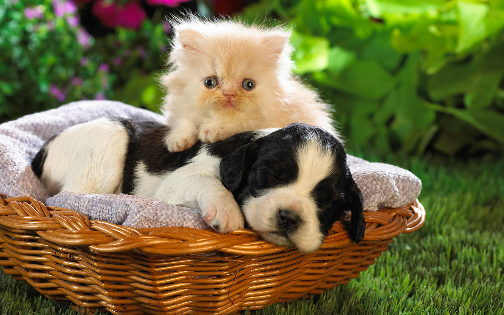 Cute Animal Wallpapers High Resolution