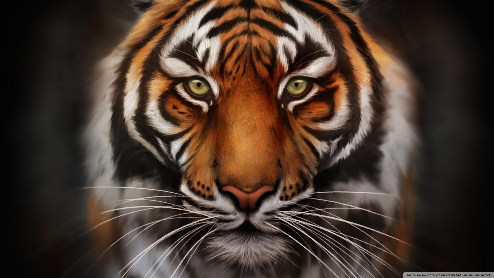 0 Tiger Wallpaper Full HD Tiger Wallpaper Full HD
