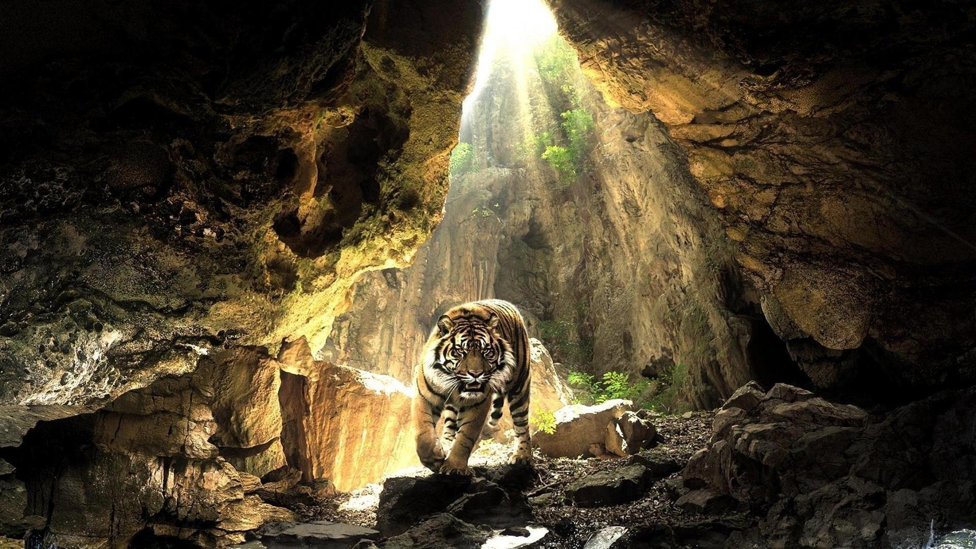 Latest Tiger Wallpaper · Tiger Background