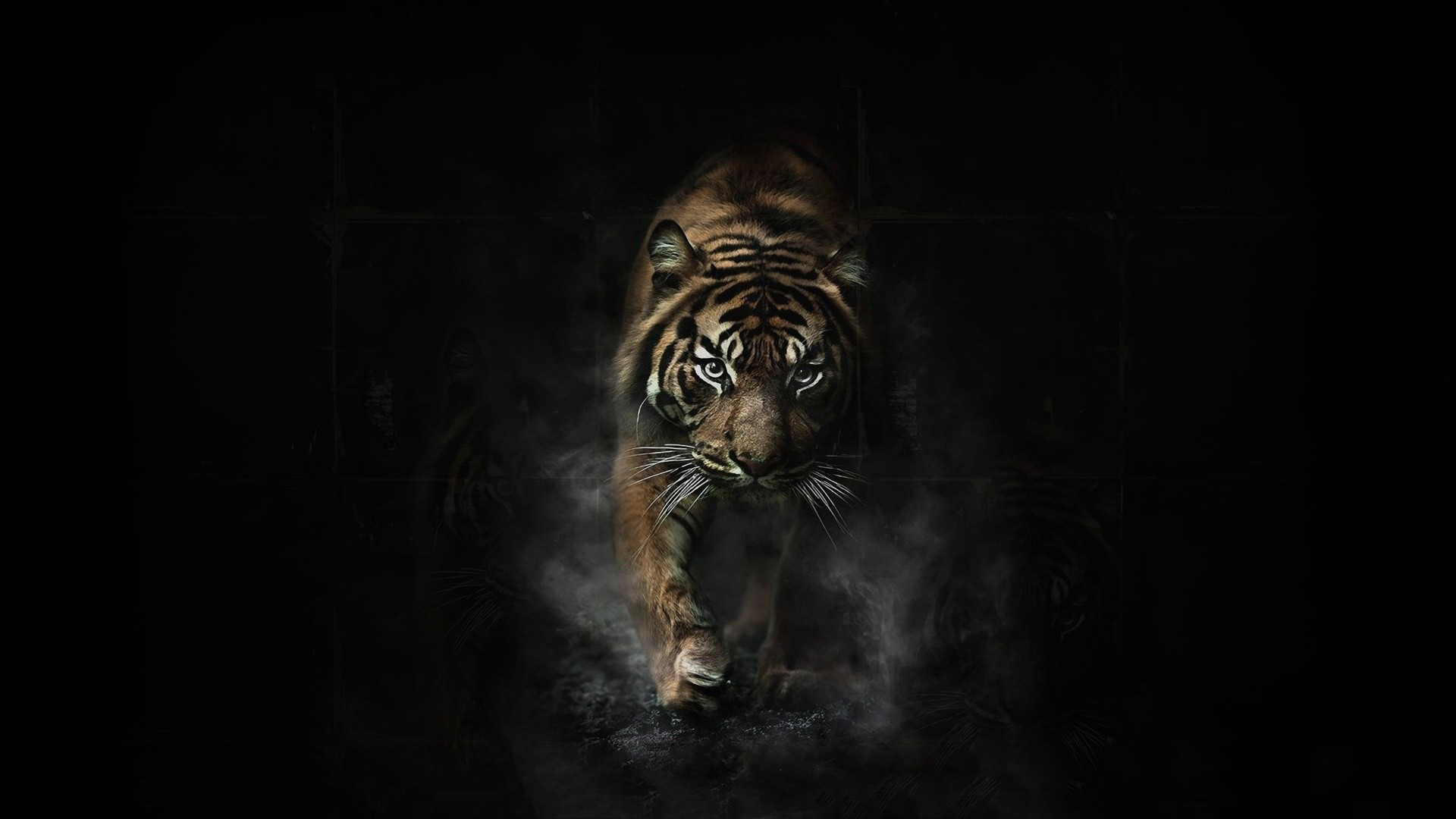 Wallpapers Angry Tiger Hd 1920×1080