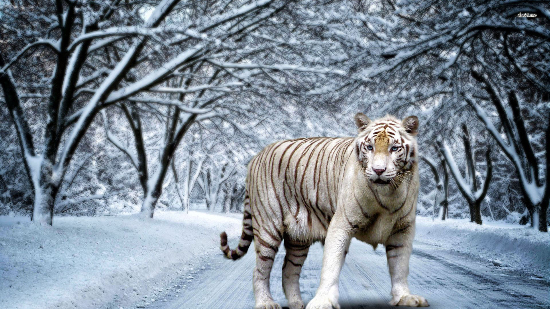 Tiger Desktop Wallpaper. Tiger Desktop Wallpaper 1920×1080