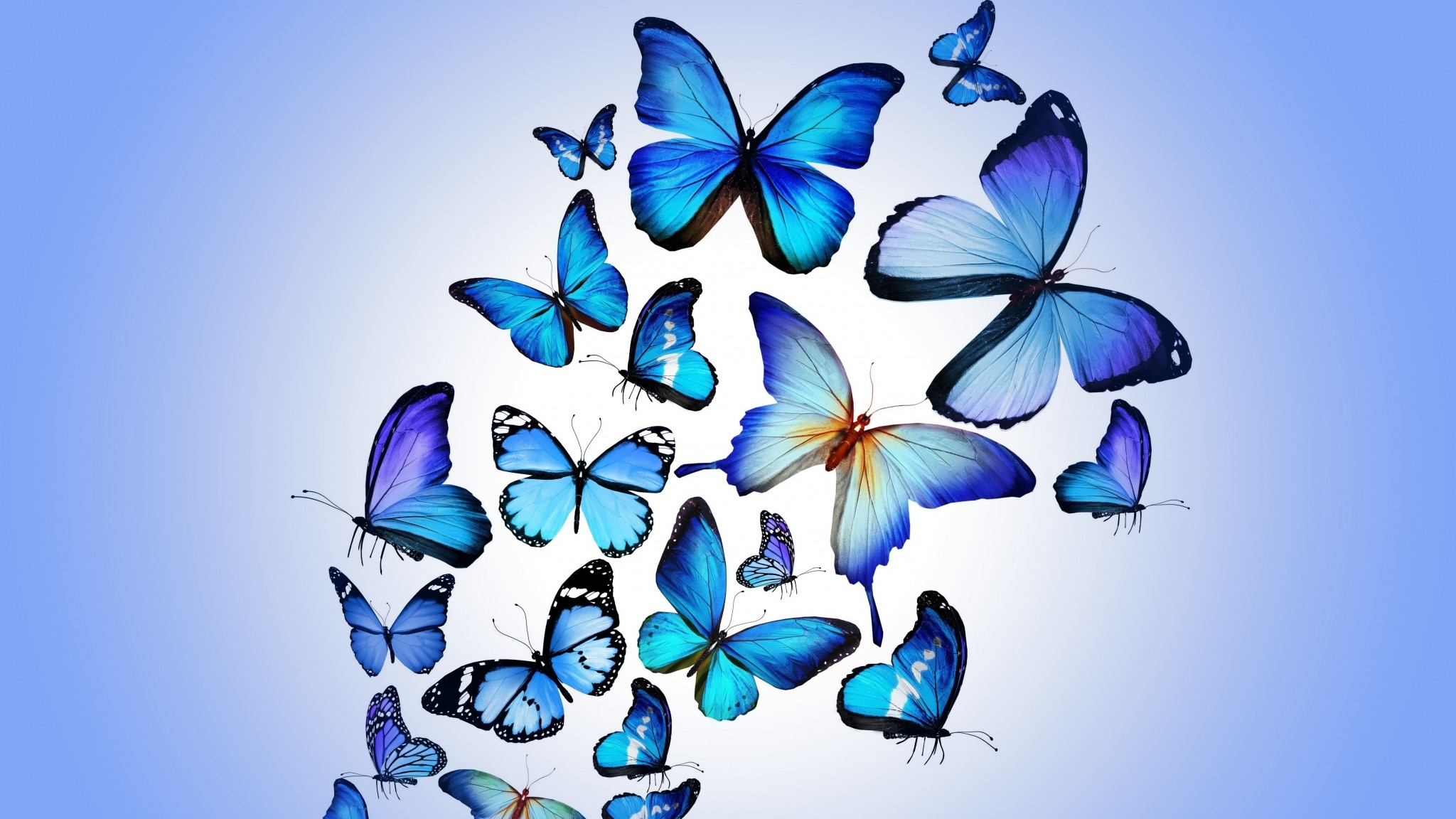 Download Free High Quality Butterfly Wallpaper The Quotes Land 1920×1200  Butterfly Picture | Adorable Wallpapers | Desktop | Pinterest | Butterfly  wallpaper …