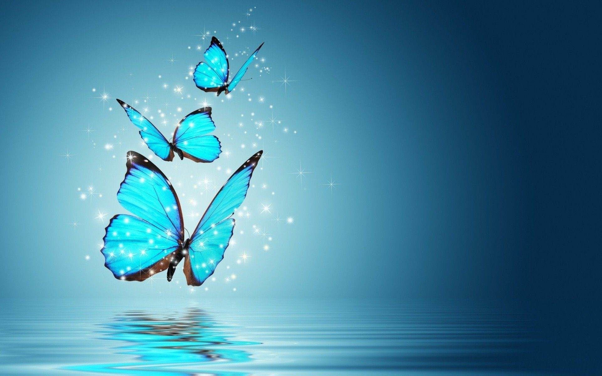 Download Free High Quality Butterfly Wallpaper The Quotes Land 1920×1200  Butterfly Picture | Adorable