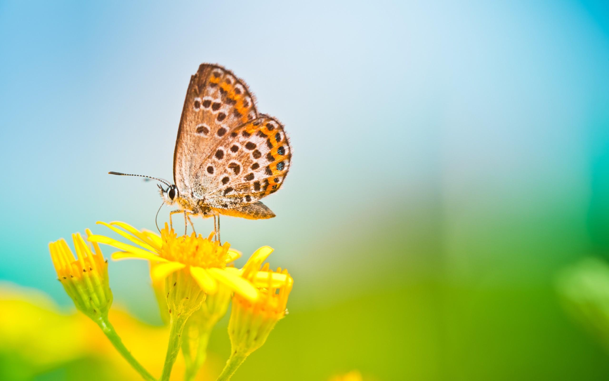 0 butterfly wallpaper butterfly wallpaper