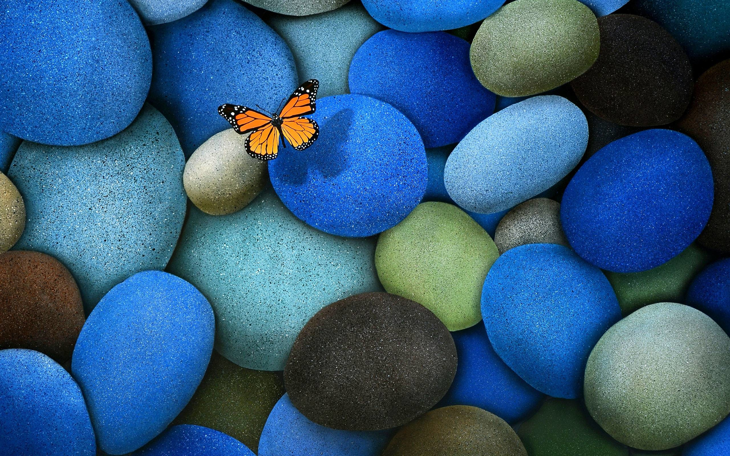 Wallpapers For > Real Blue Butterfly Wallpaper