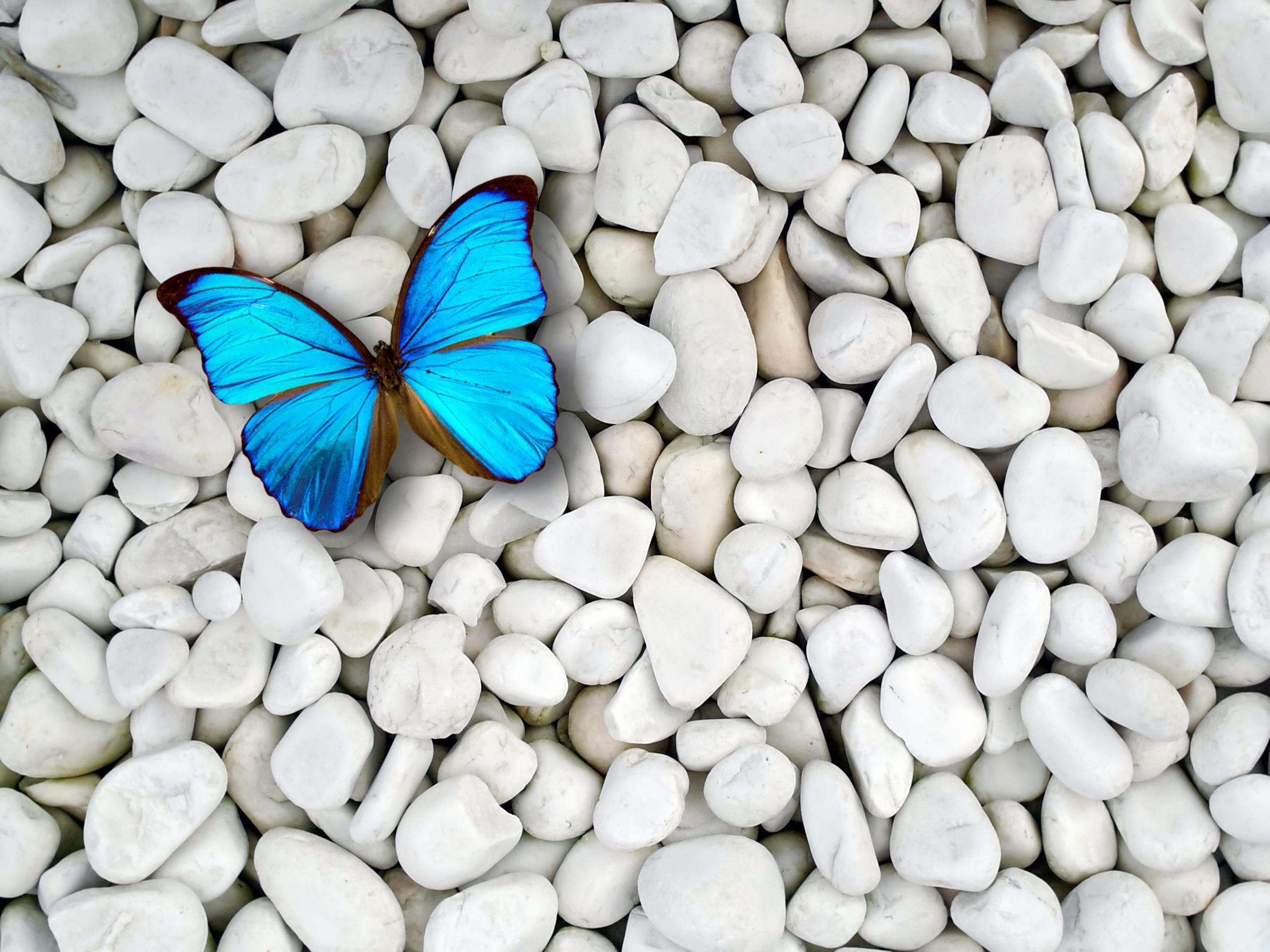 Desktop blue butterfly wallpaper HD.