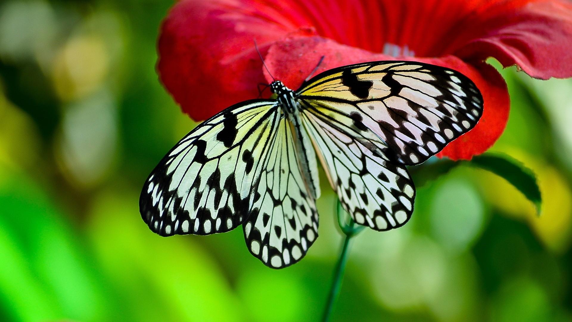 great butterfly wallpaper for walls hd u with butterfly wallpaper.