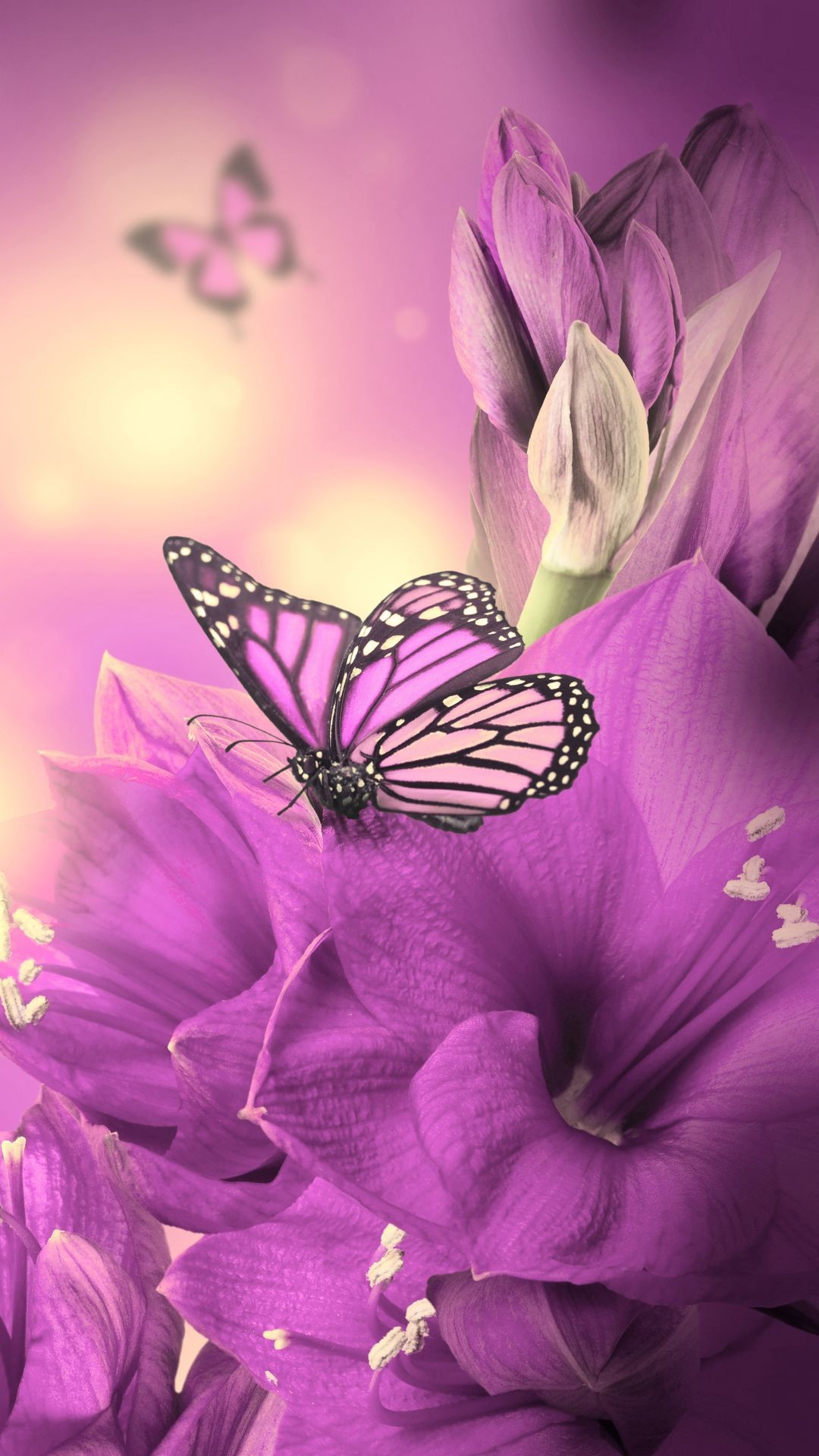 Animated butterfly wallpapers for mobile