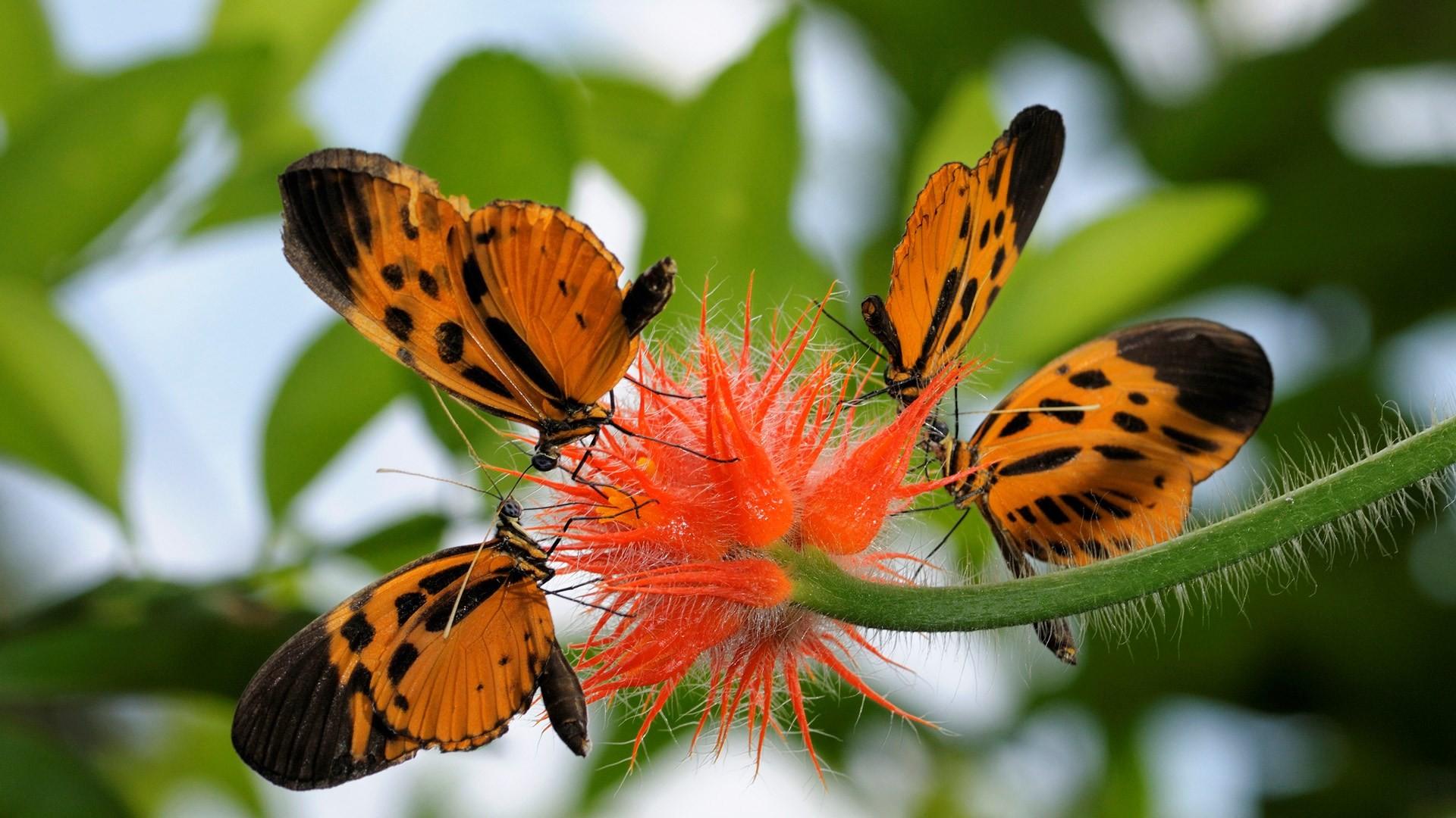butterfly screensavers backgrounds – butterfly category
