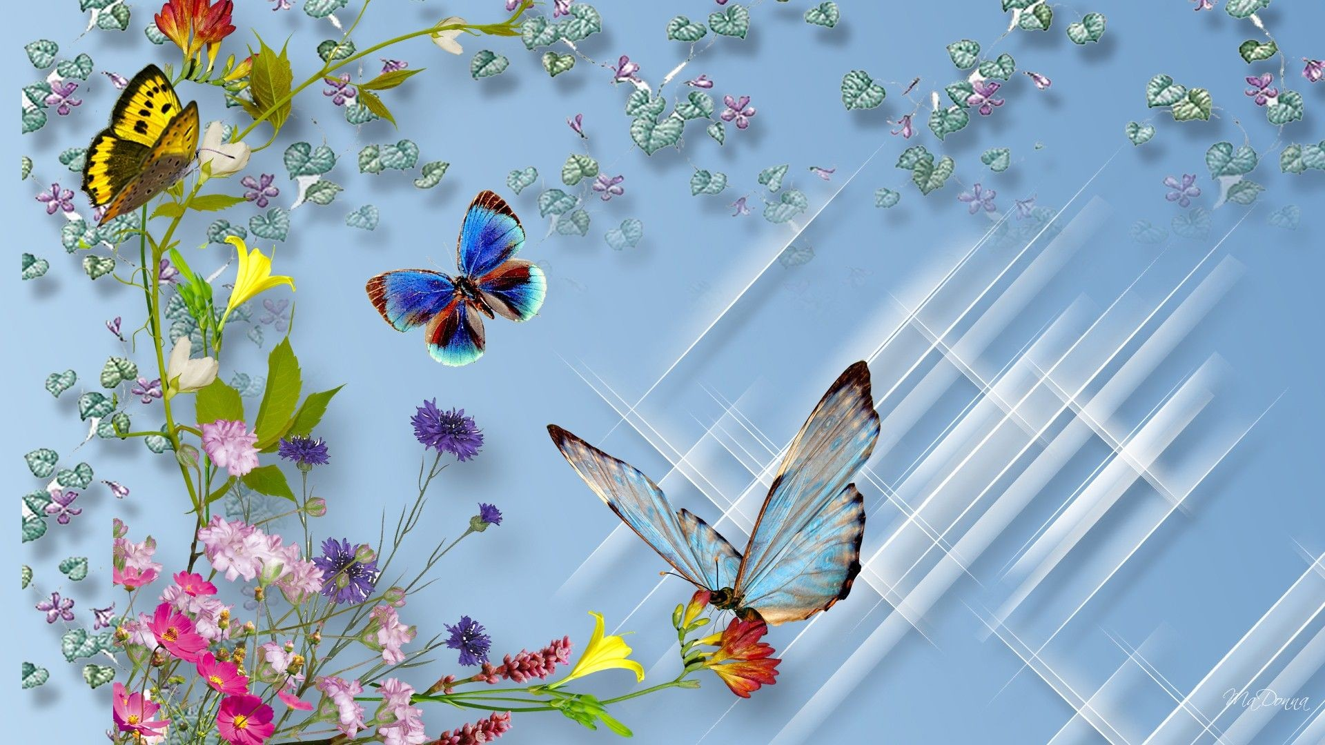 Butterfly And Flower Wallpapers – Wallpaper Cave