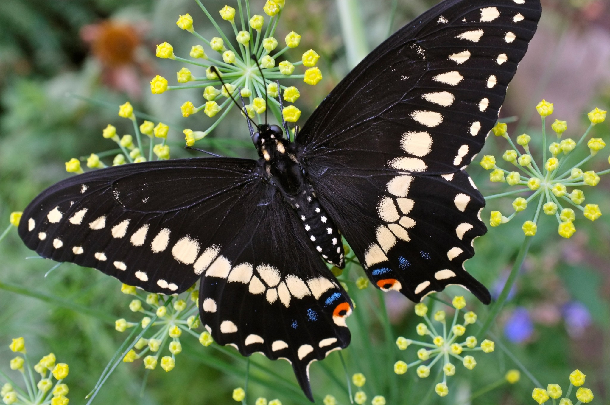 butterfly backgrounds for desktop hd backgrounds