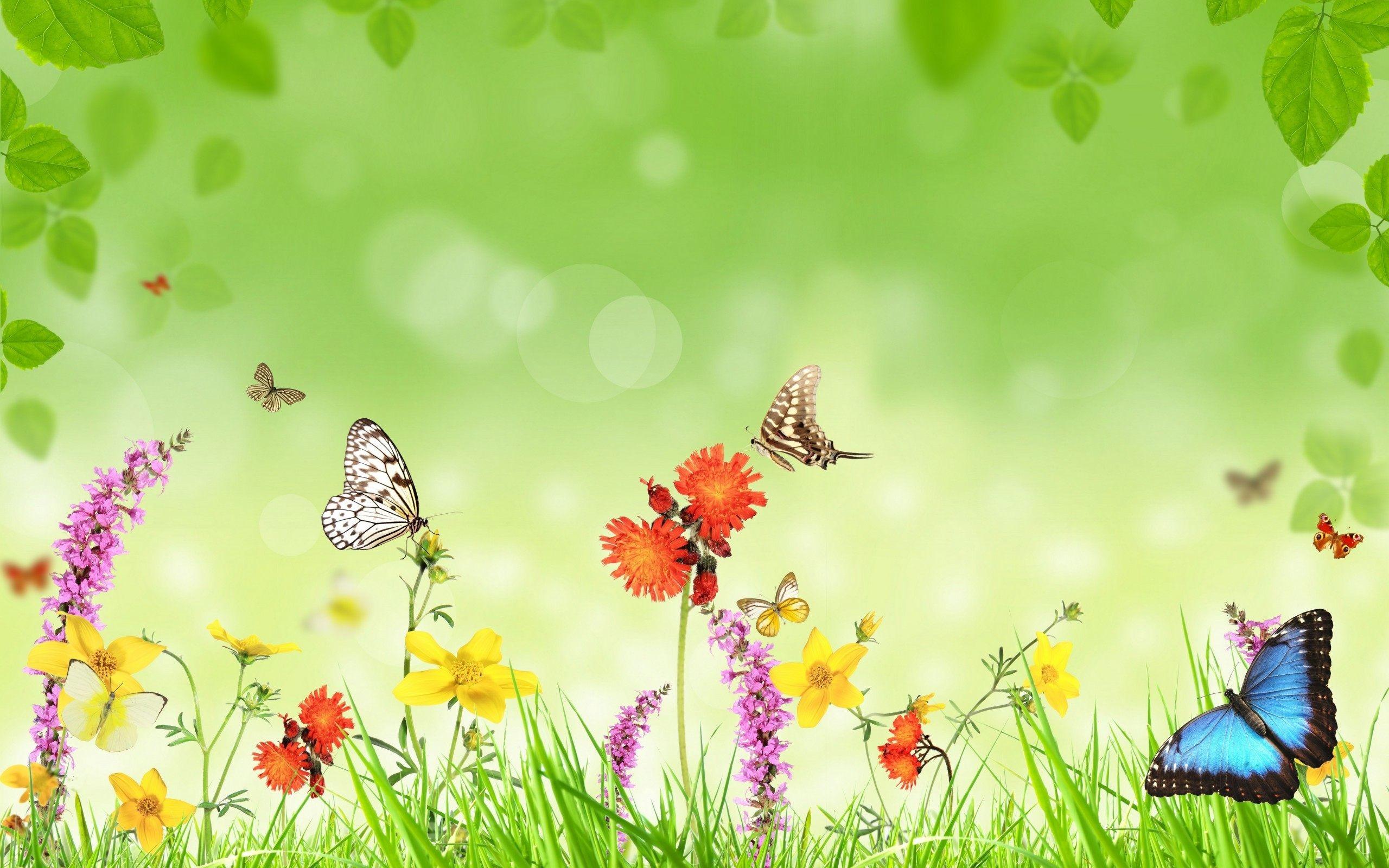 … Butterfly Wallpaper Download HD