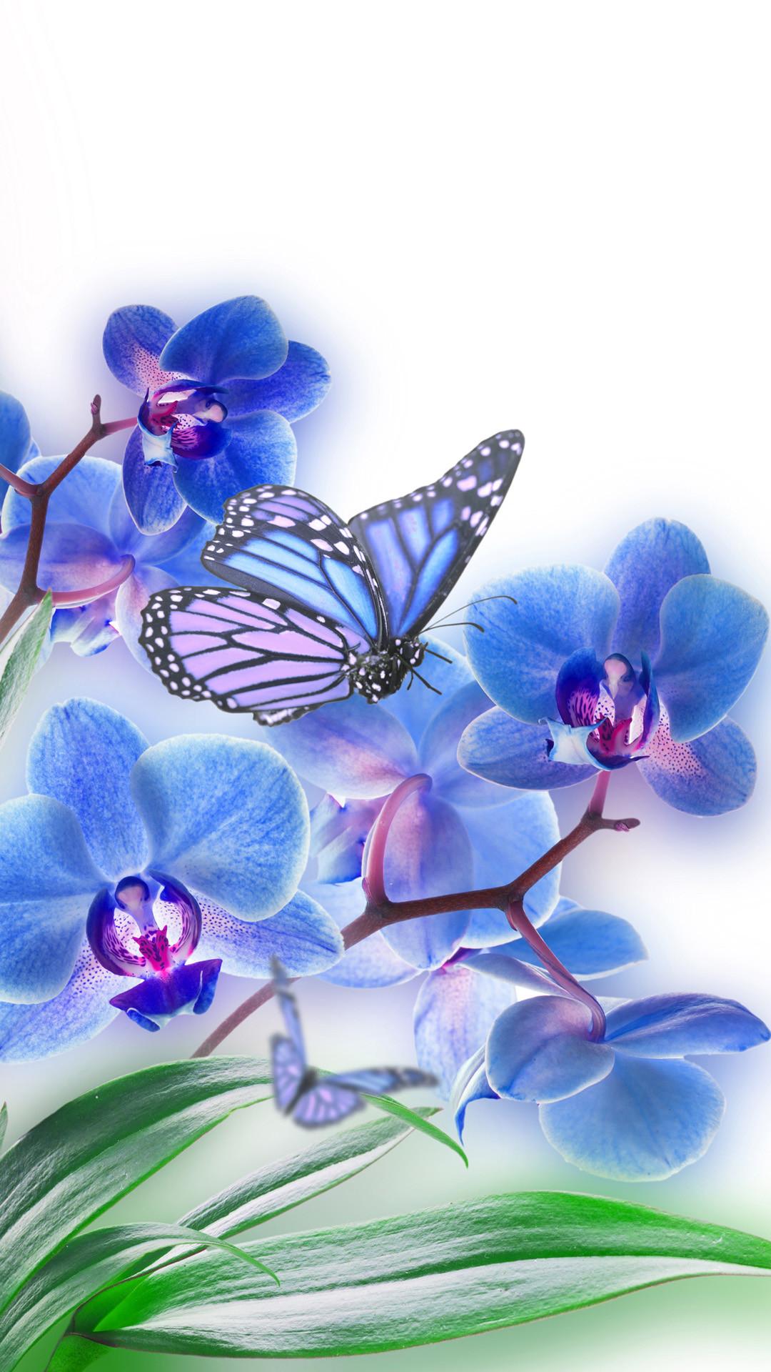 Butterfly iPhone HD Background Pixels Talk