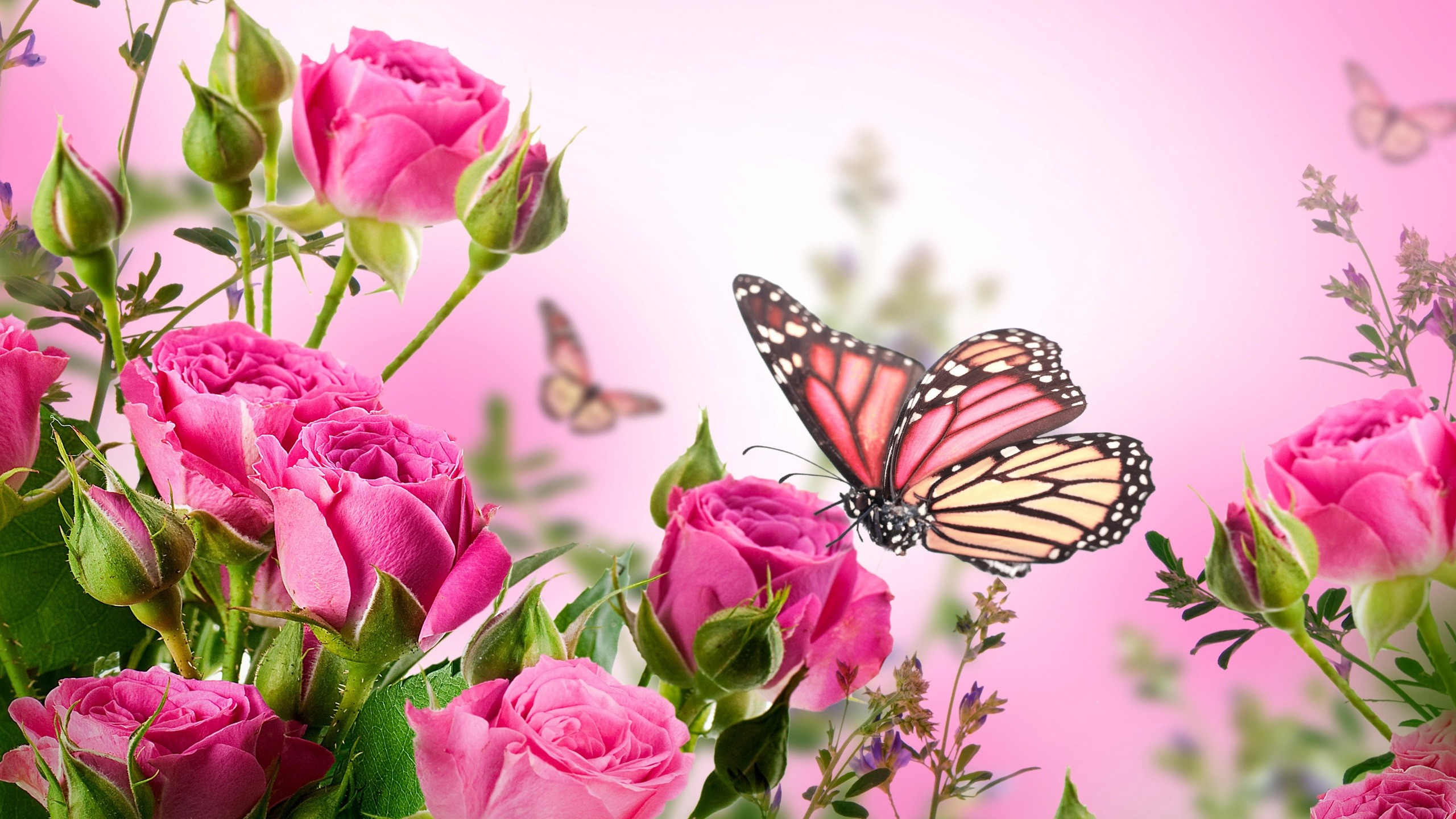 … Pink Butterfly Wallpaper High Definition Purple Pink Red Blue .