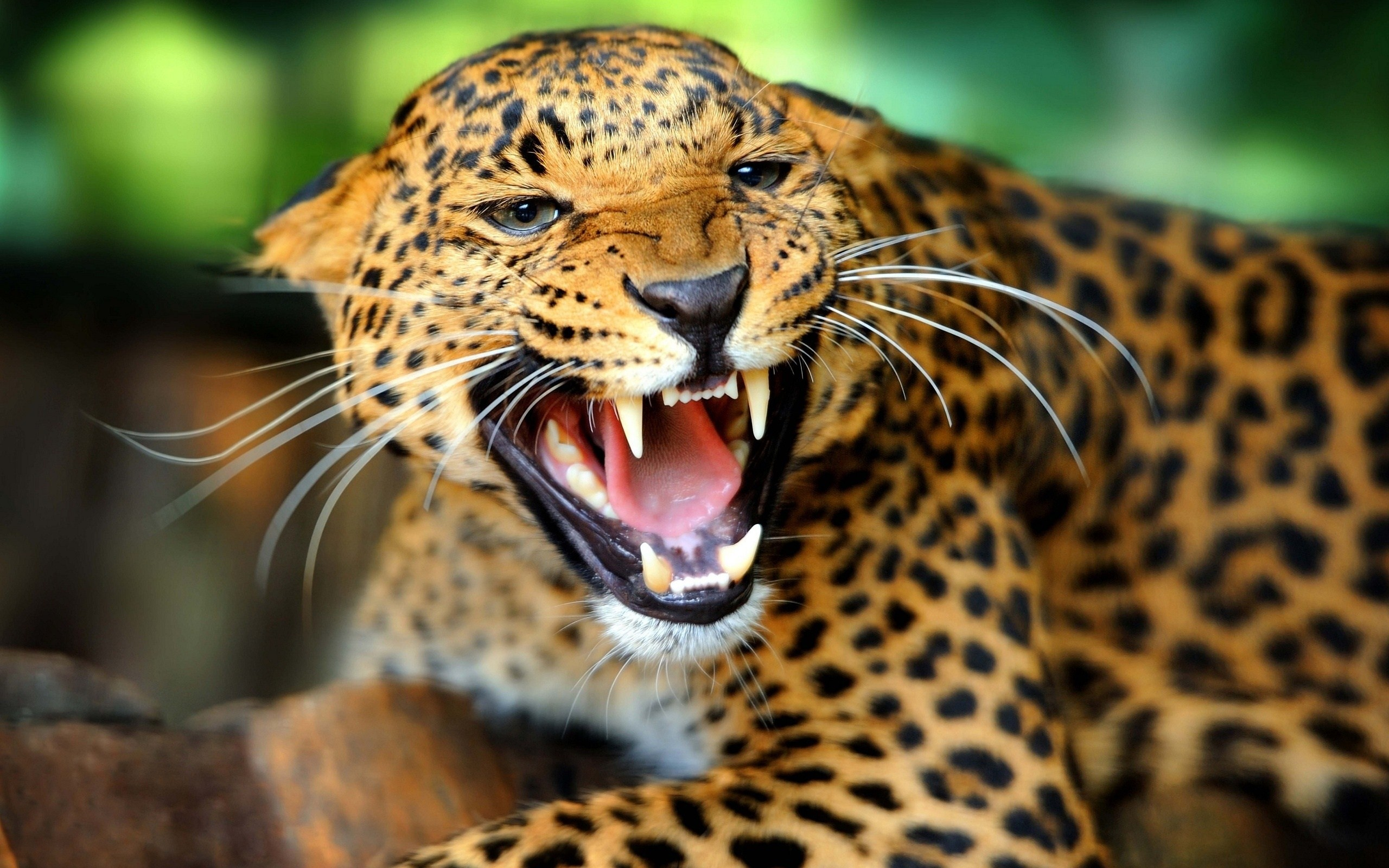 … HD Animals Wallpapers Group (9)
