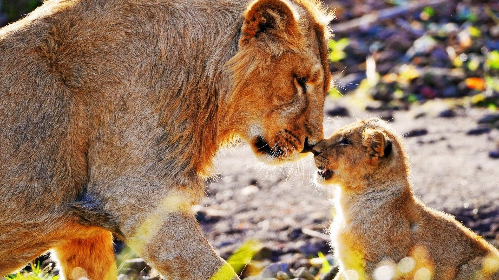 This article will help you to get desired African Animals Wallpapers for  your device which are