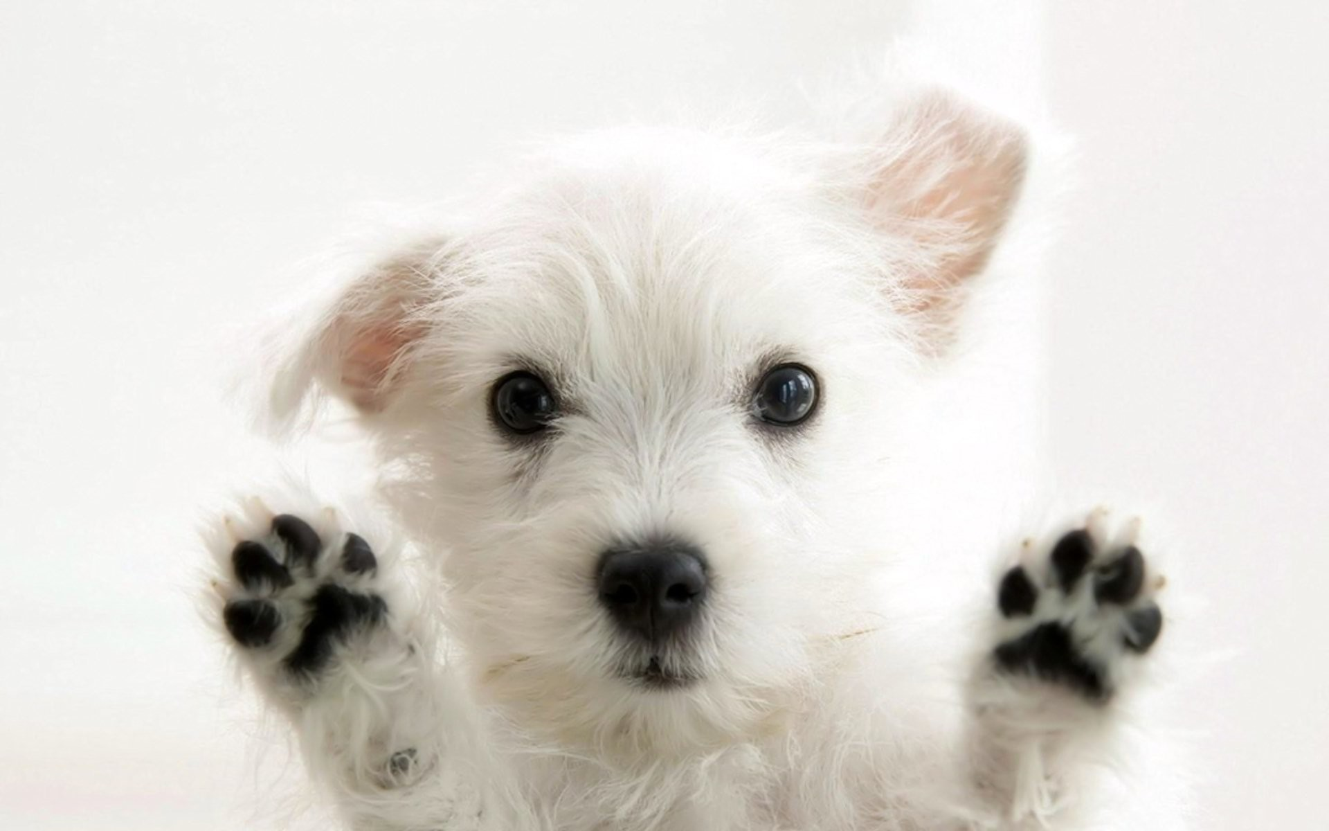 HD Wallpaper | Background ID:102211. Animal Dog