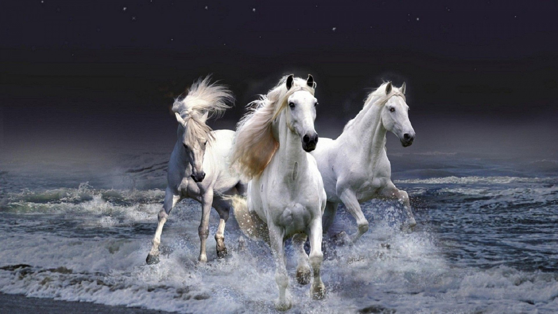 Three white horses – Animal Wallpaper