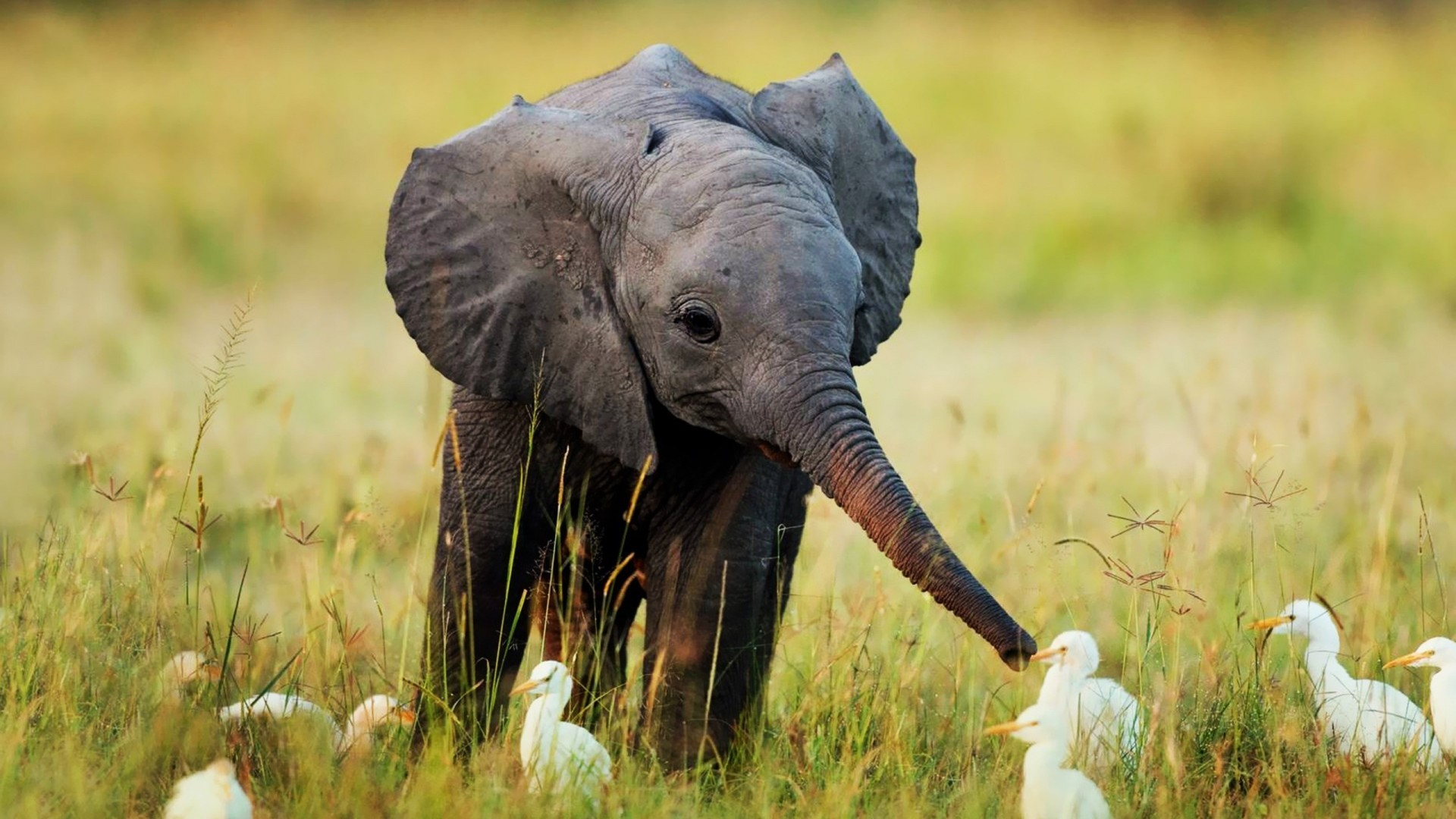 Elephant. Say. Download This Wallpaper …