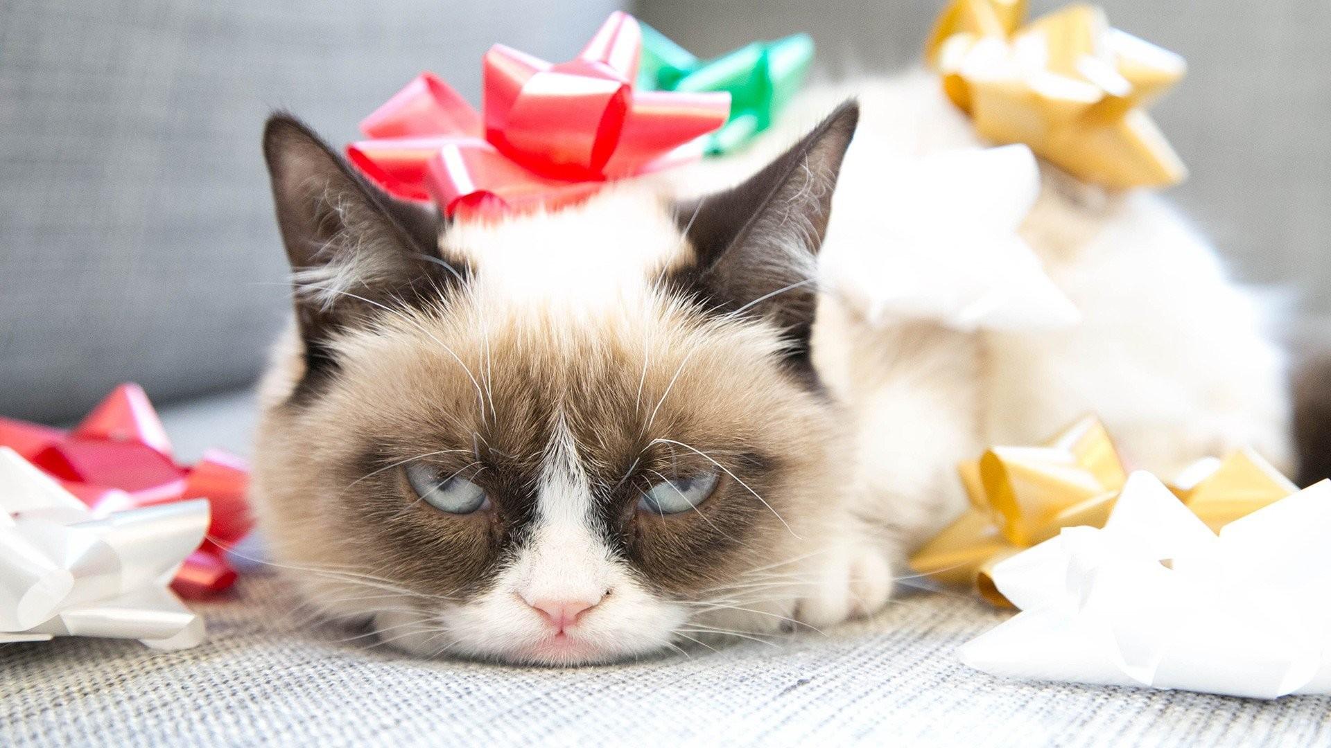 Grumpy Cat …