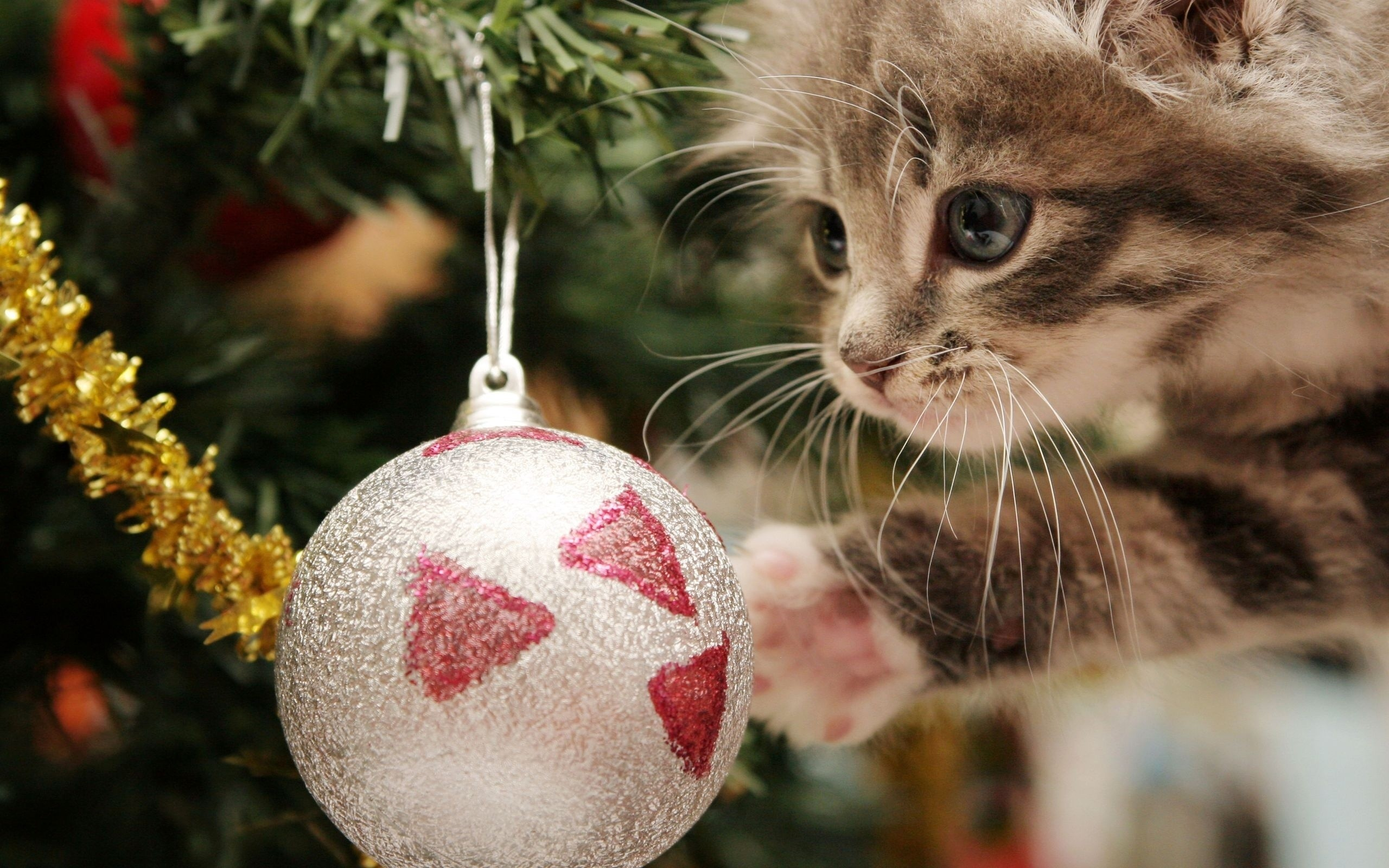 christmas cat images for free wallpaper