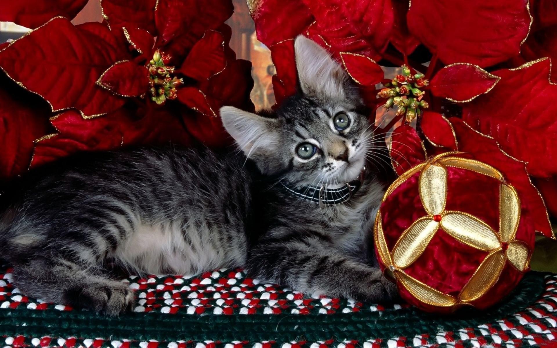 Christmas Cat 697818