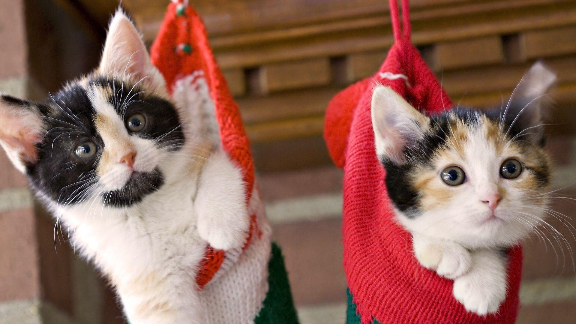 <b>Christmas</b> costume for <b>cats</