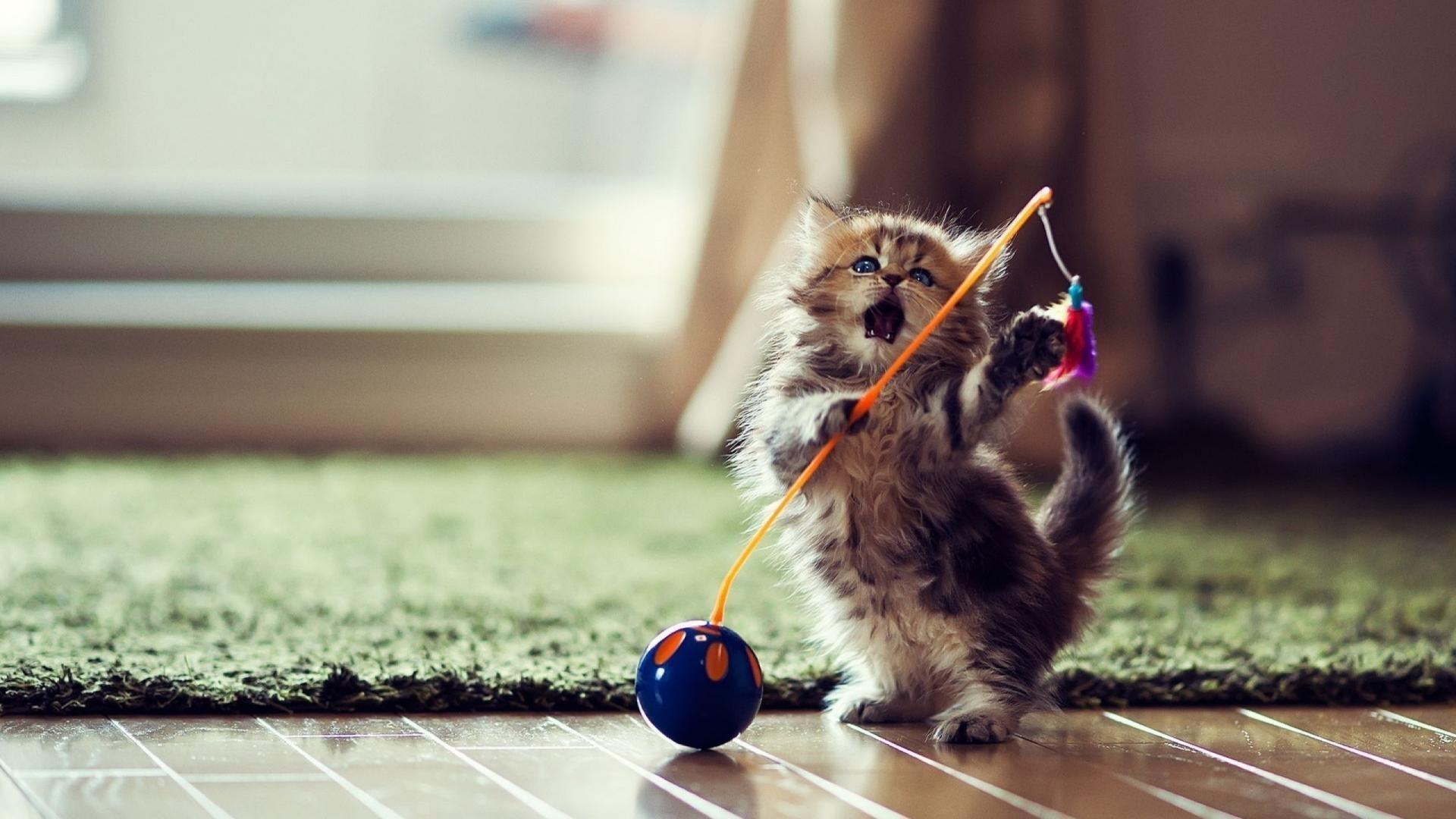 Funny Cat Wallpaper | Download Wallpapers
