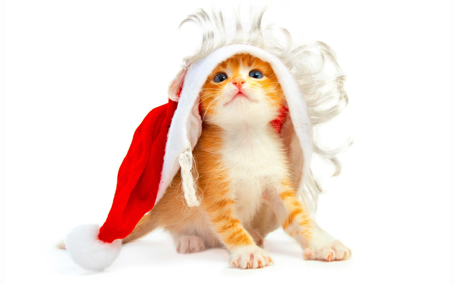Funny Christmas Wallpaper | Christmas Wallpaper